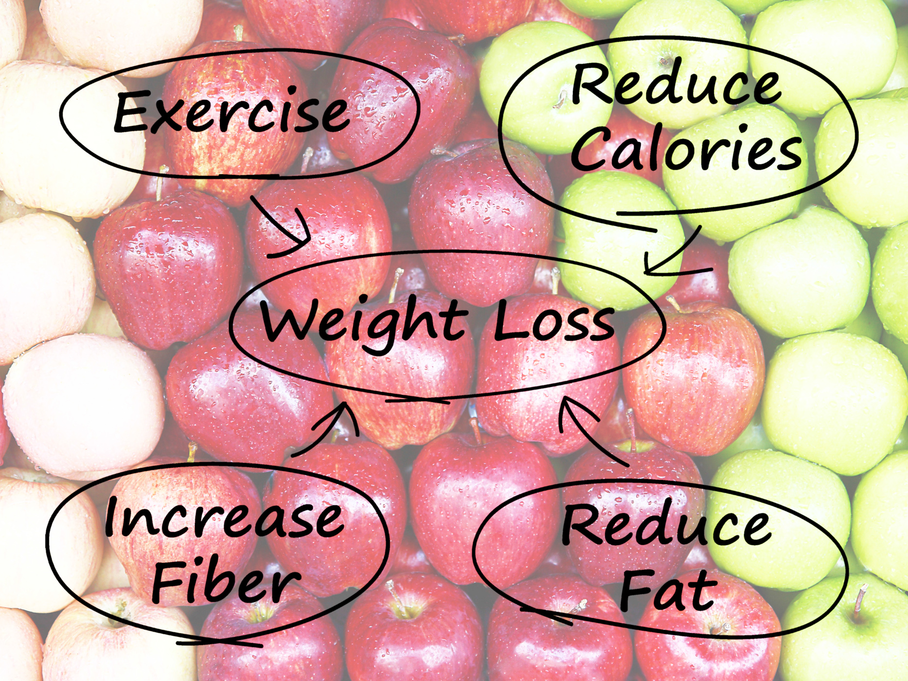 Weight loss diagram shows fiber exercise fat and calories photo