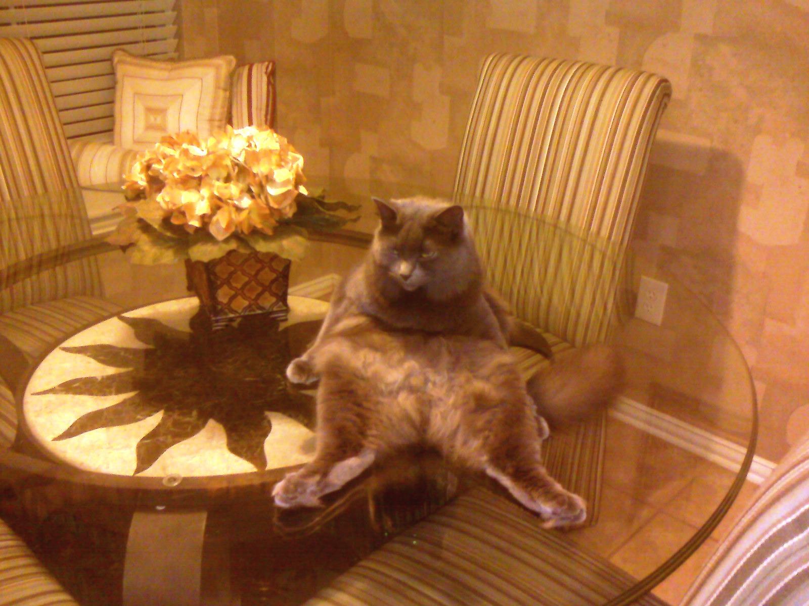 Weird Cat | Daily Foolishness