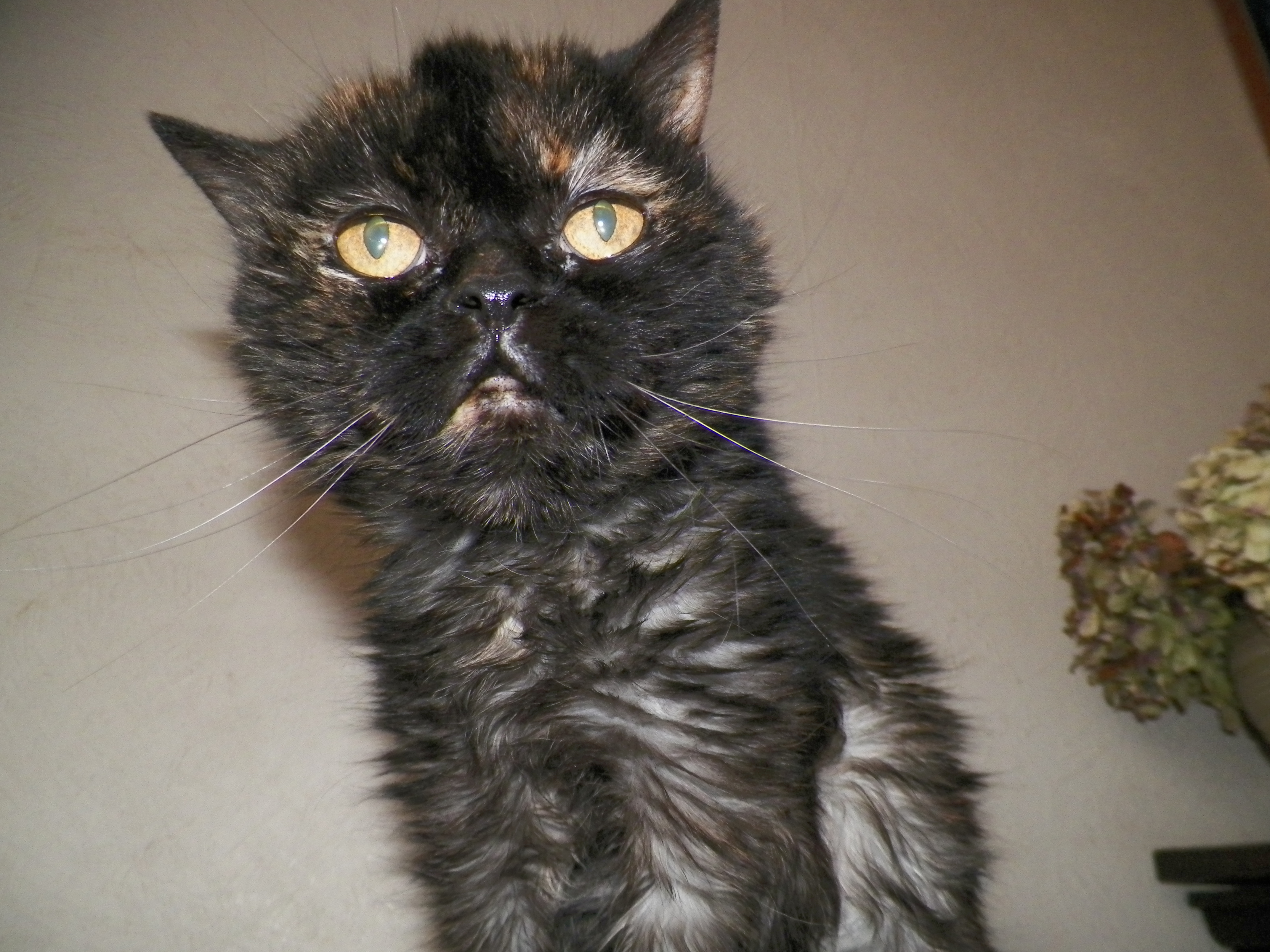 Weird Cat, Black, Cat, Eyes, Orange, HQ Photo