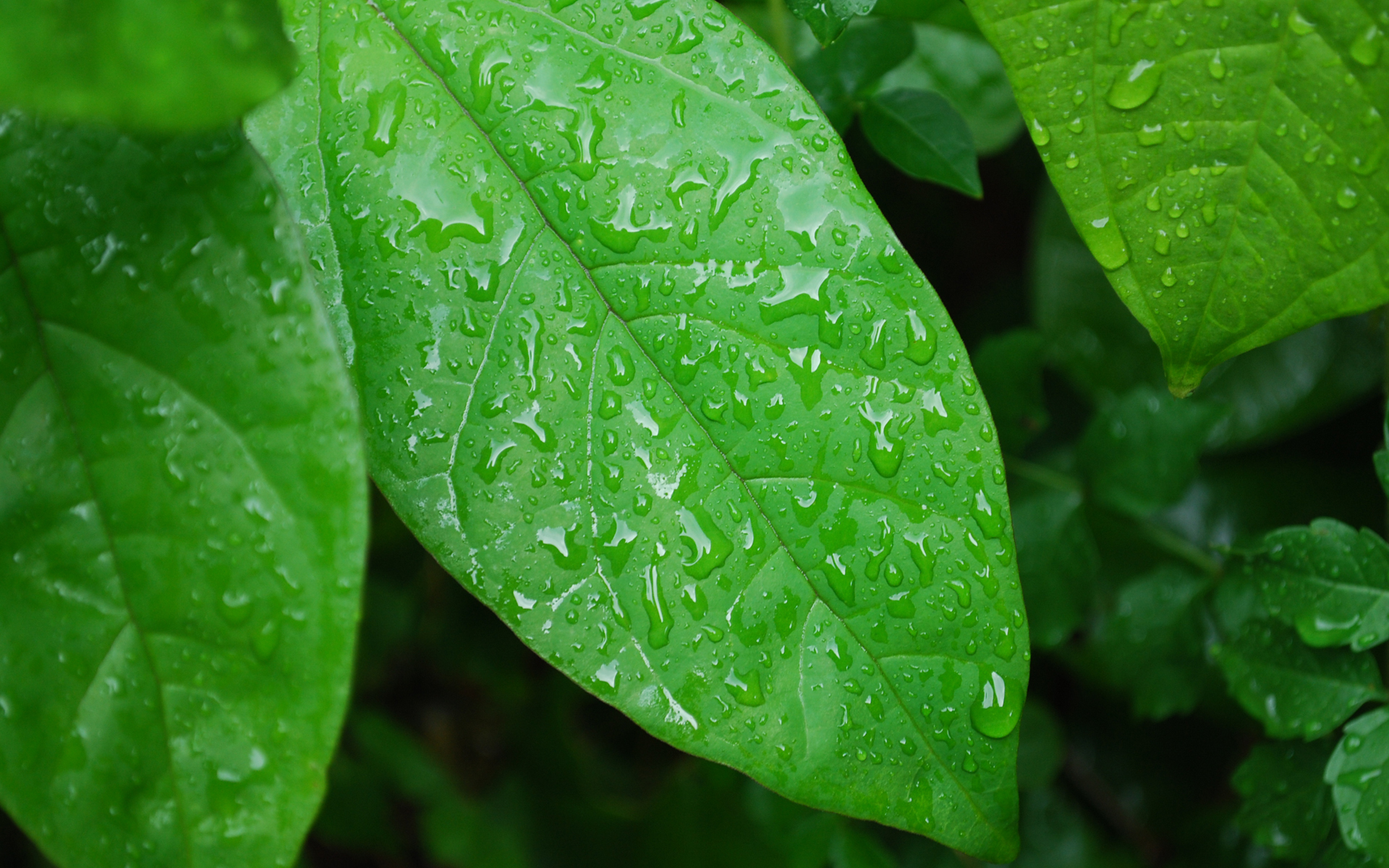Green Nature Leaves Wet Plants Water - [1920 x 1200]