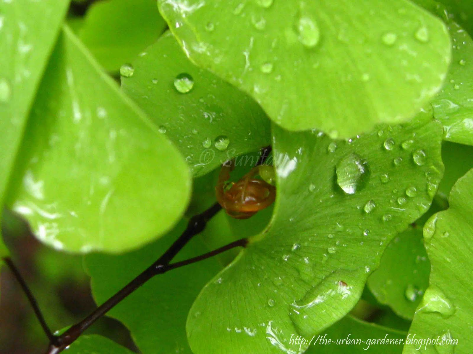 The Urban Gardener: It's a wet, green world!