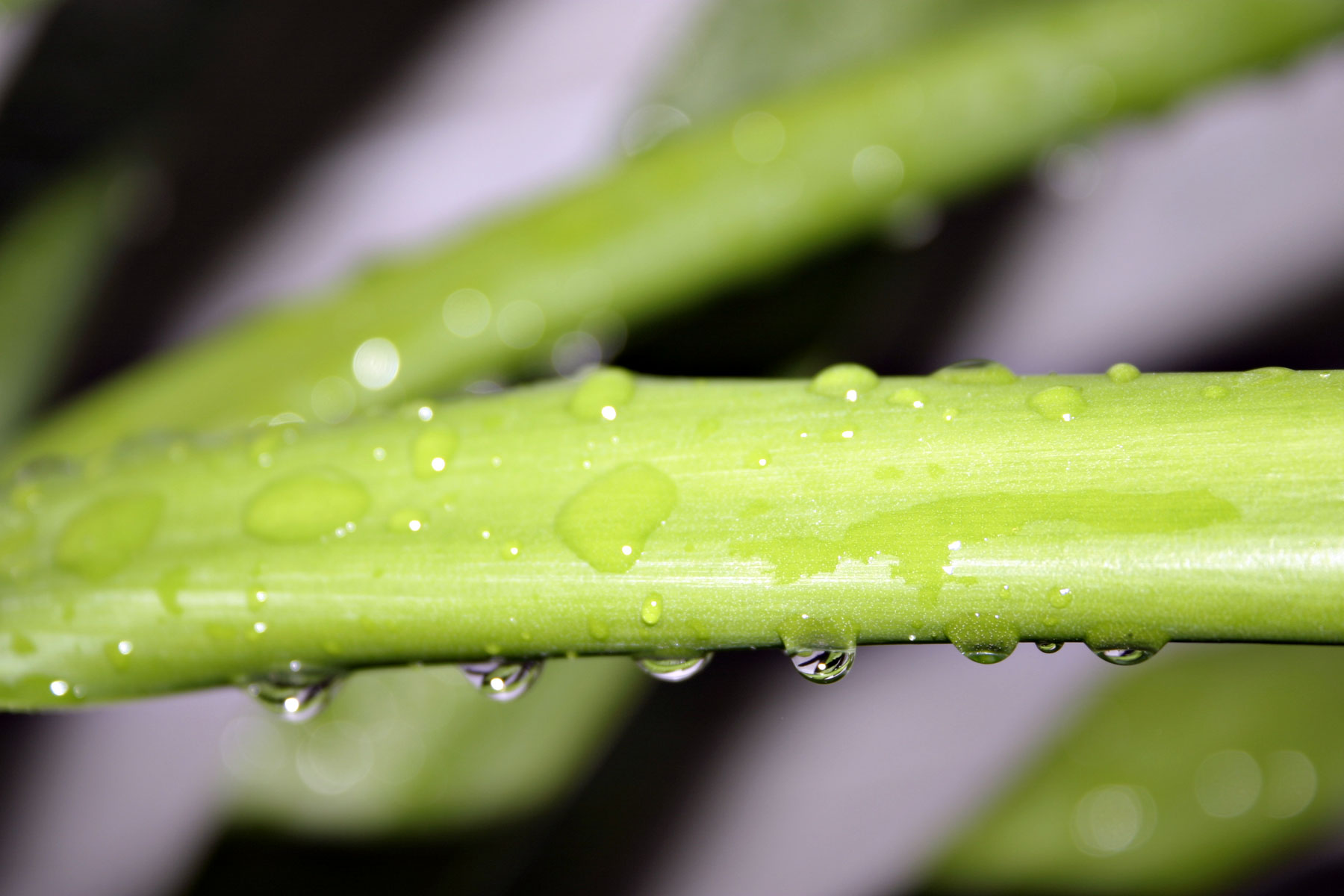 Wet green plant, Closeup, Drops, Green, Plant, HQ Photo