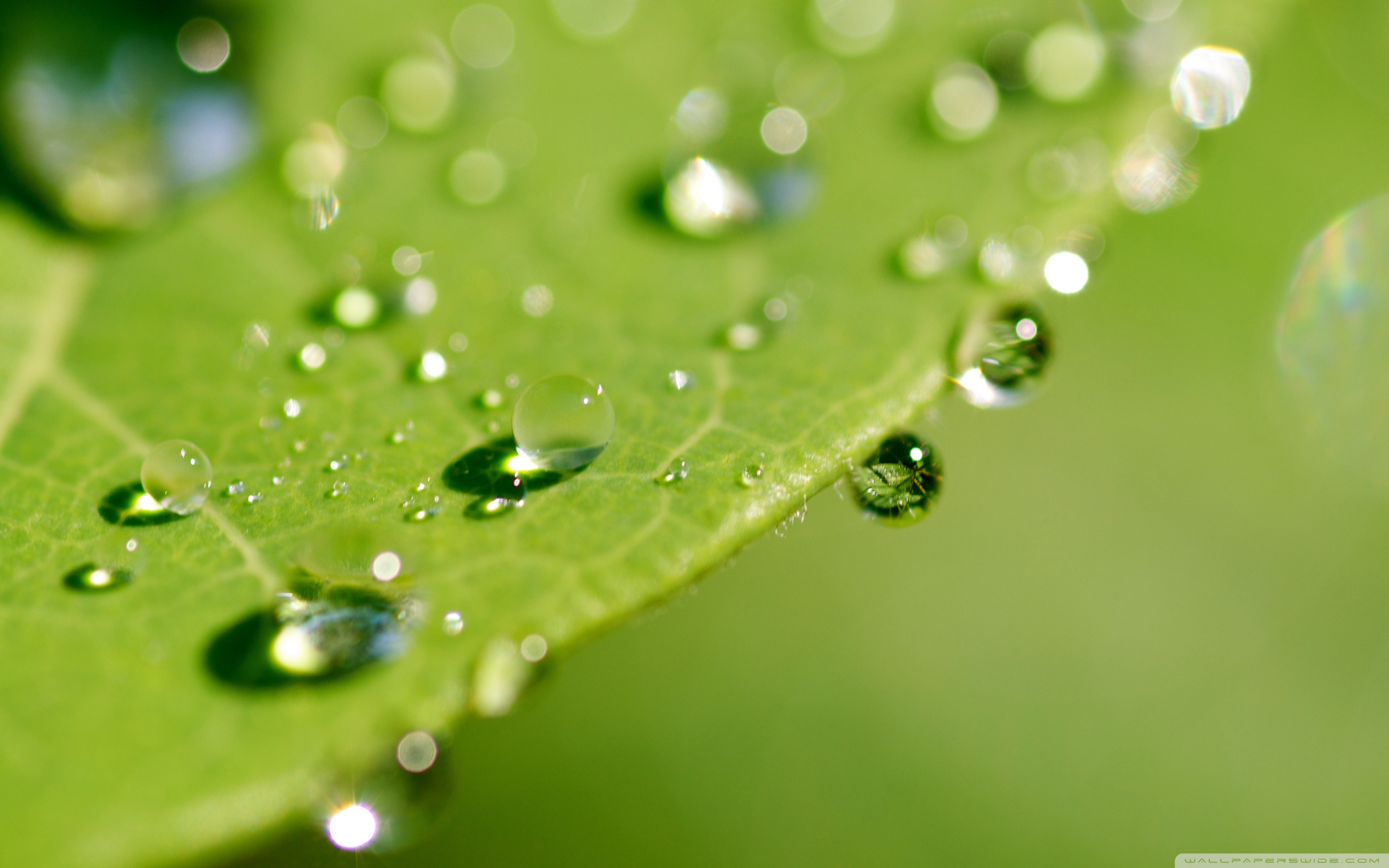 Green Wet Leaf, Macro ❤ 4K HD Desktop Wallpaper for 4K Ultra HD TV ...