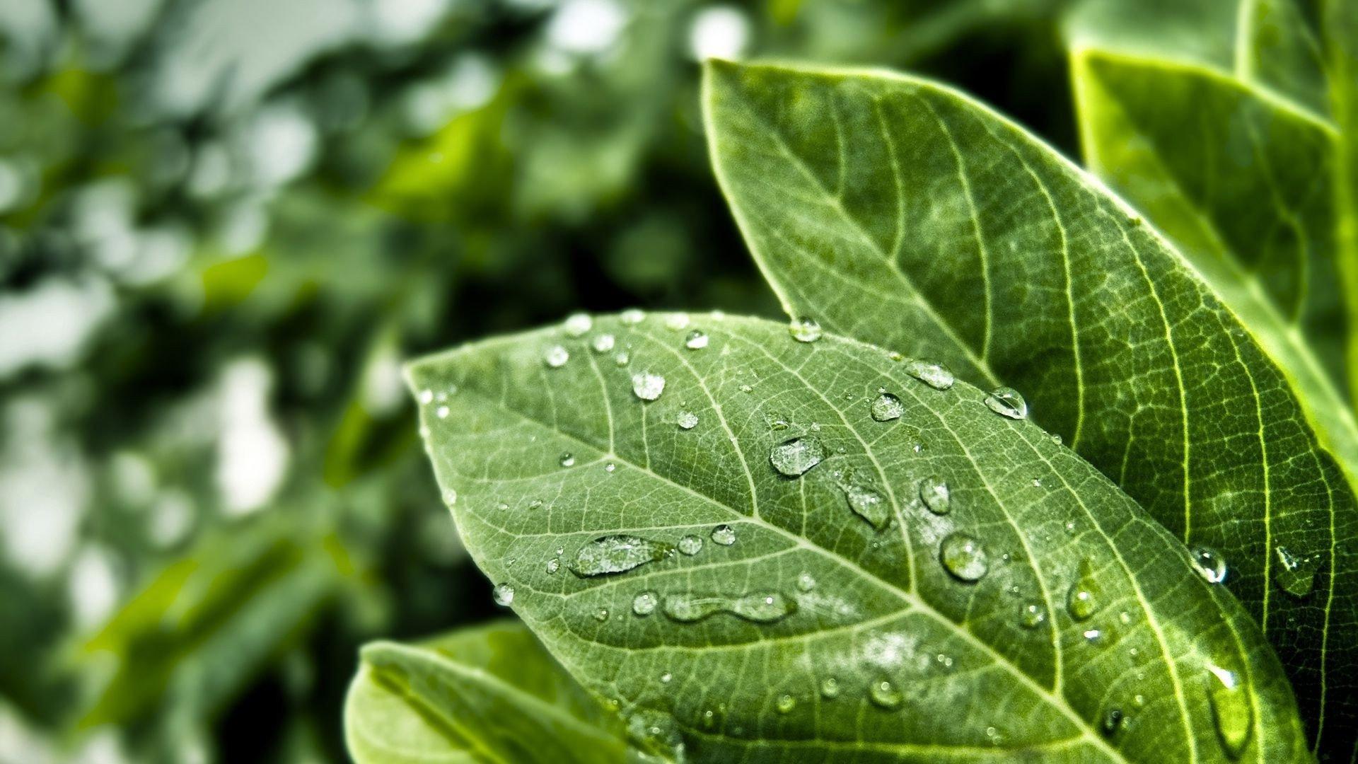 Wet Leaves 329772 - WallDevil