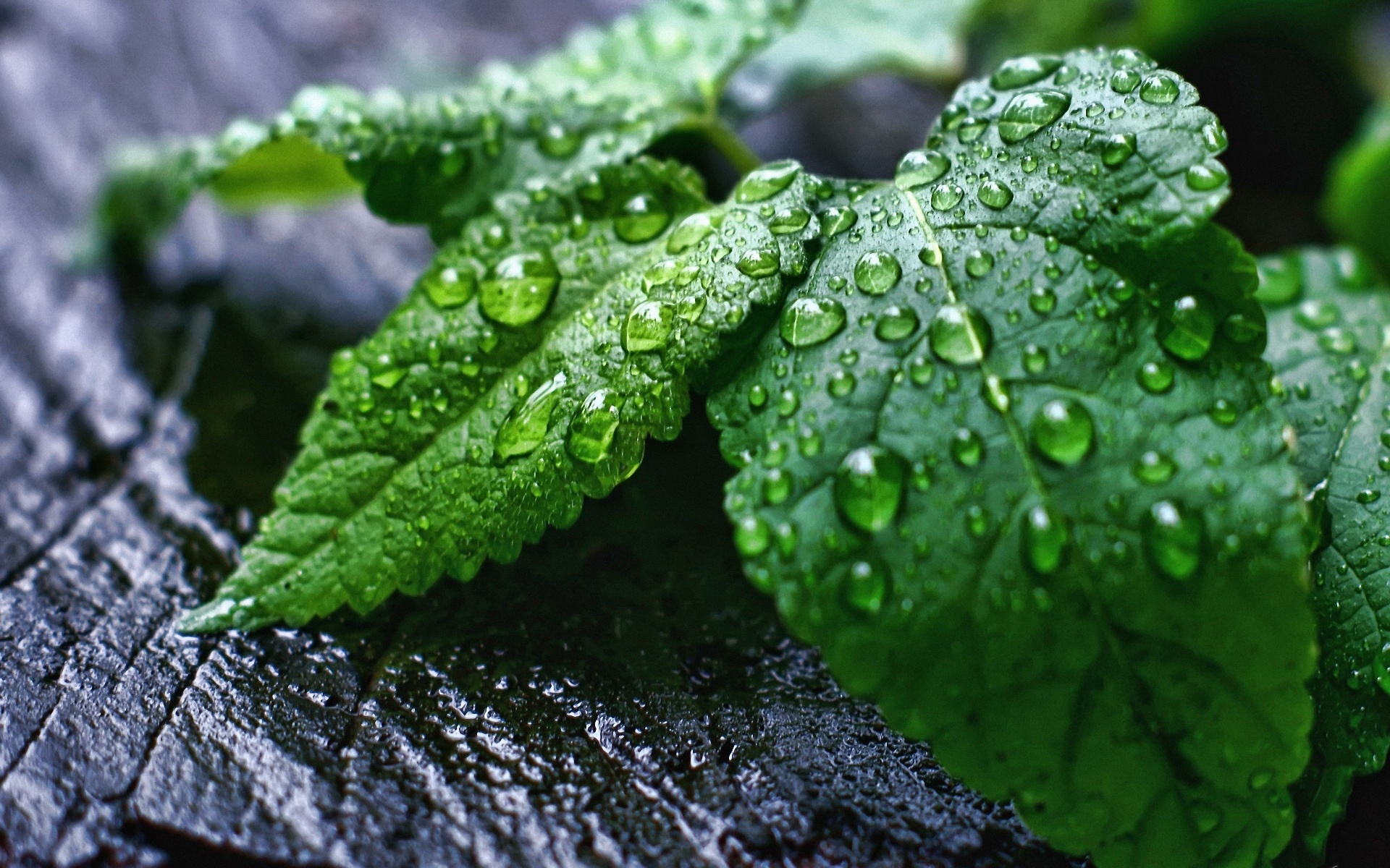 Wet Leaves Wallpapers - 1920x1200 - 834087