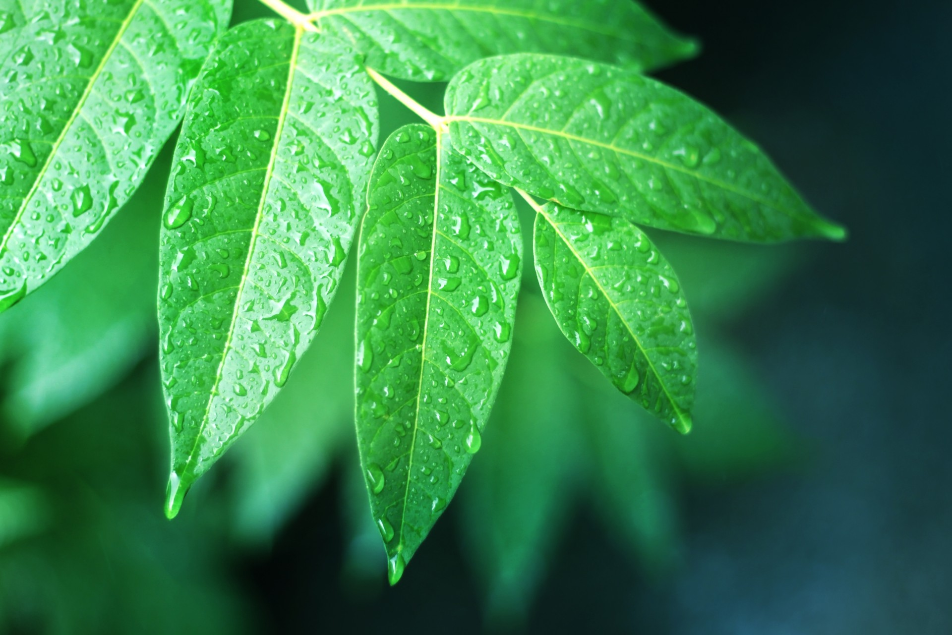 Wet Leaves Free Stock Photo - Public Domain Pictures