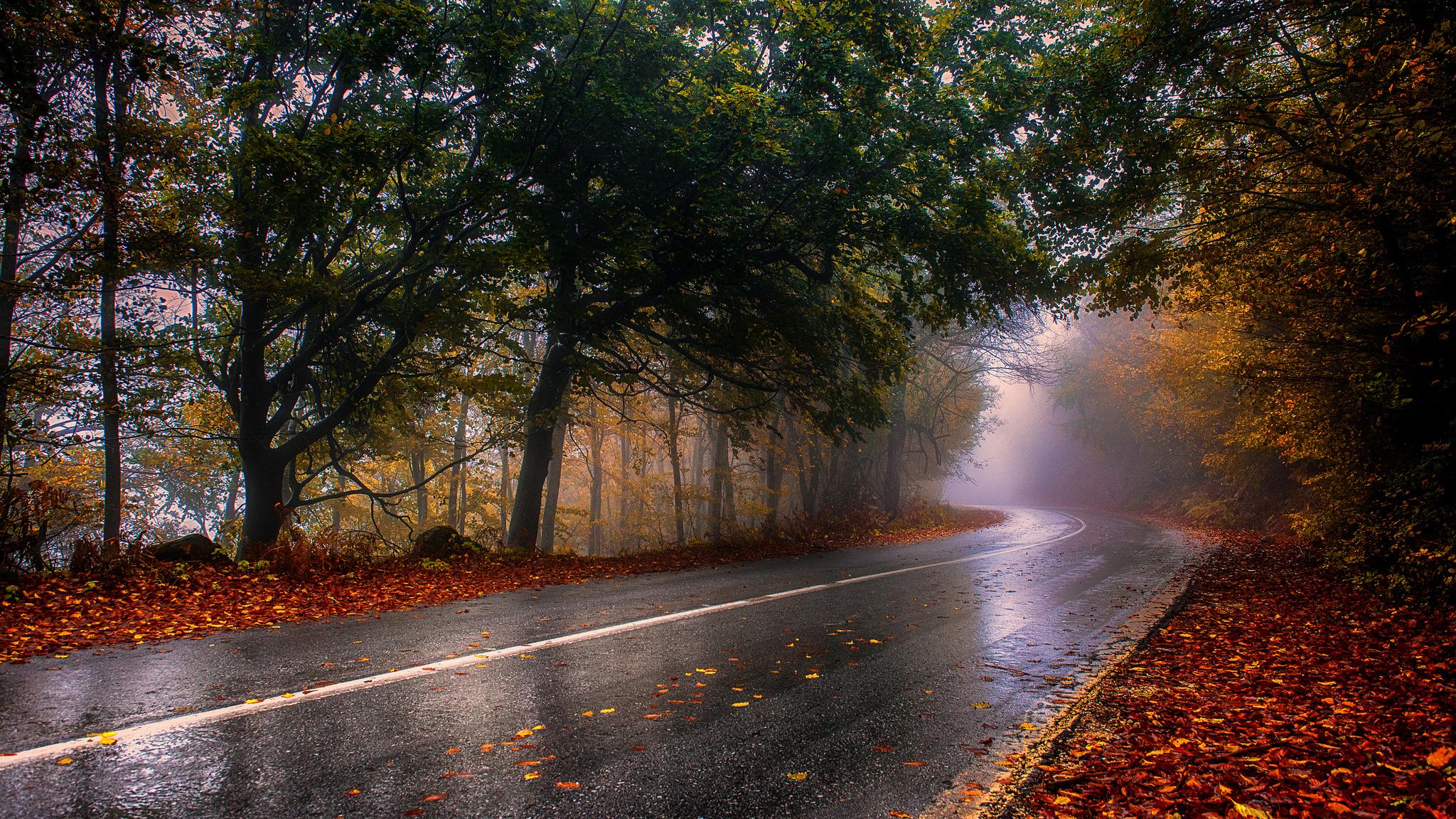 Autumn wet road / 2048 x 1152 / Nature / Photography | MIRIADNA.COM