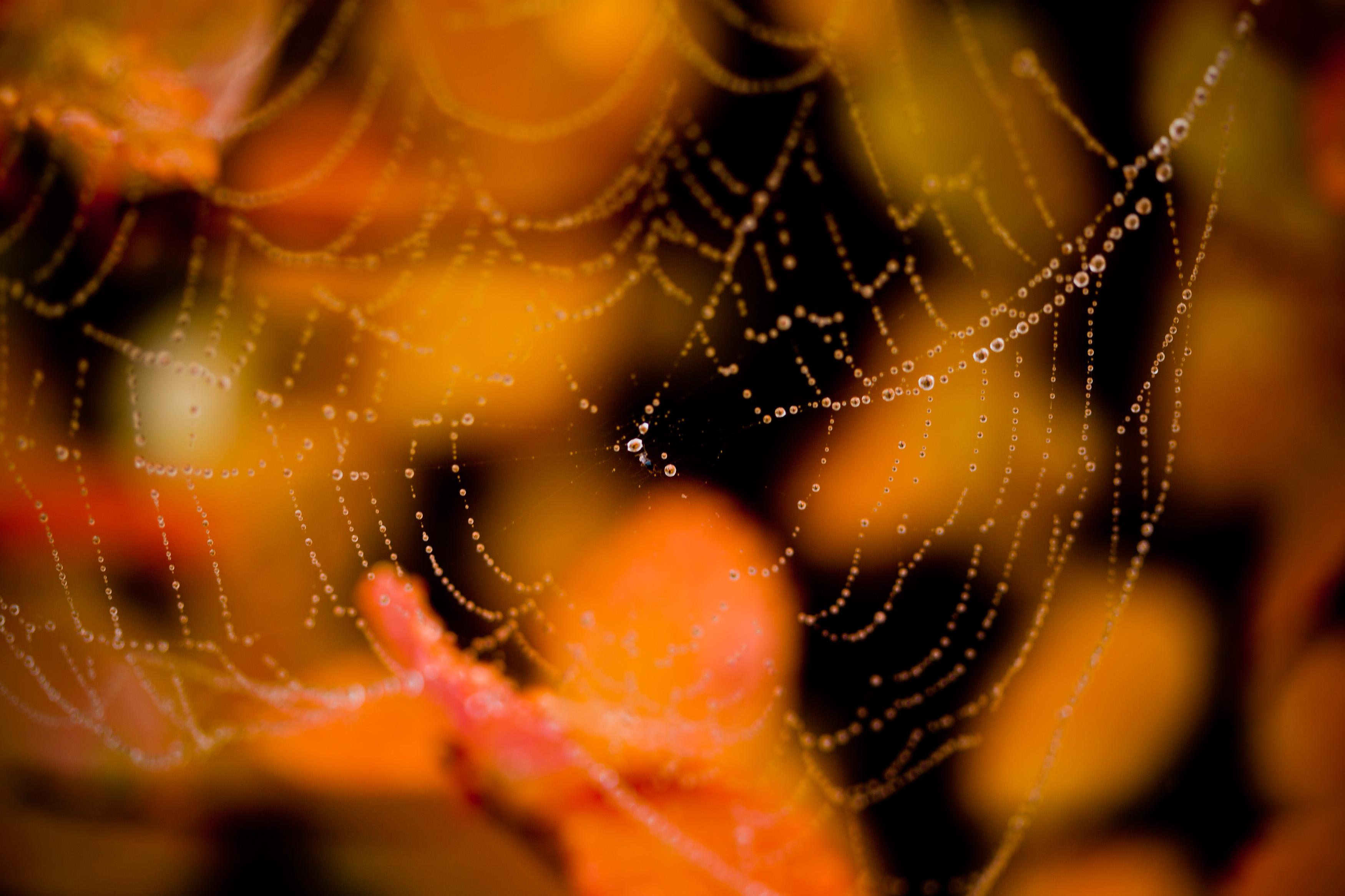 Wet spider web photo