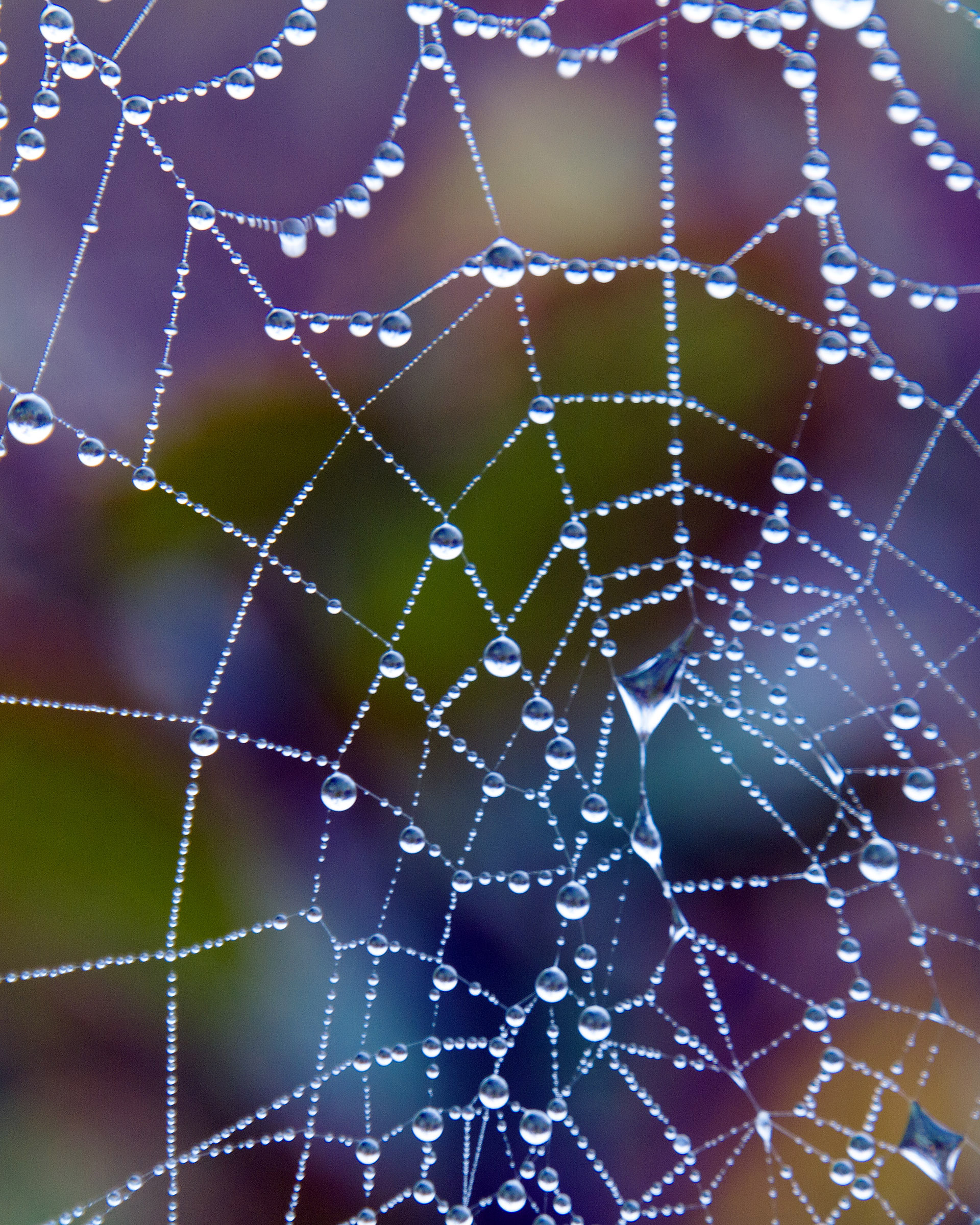 Wet Spider Web, Work, Networking, Morning, Muddle, HQ Photo