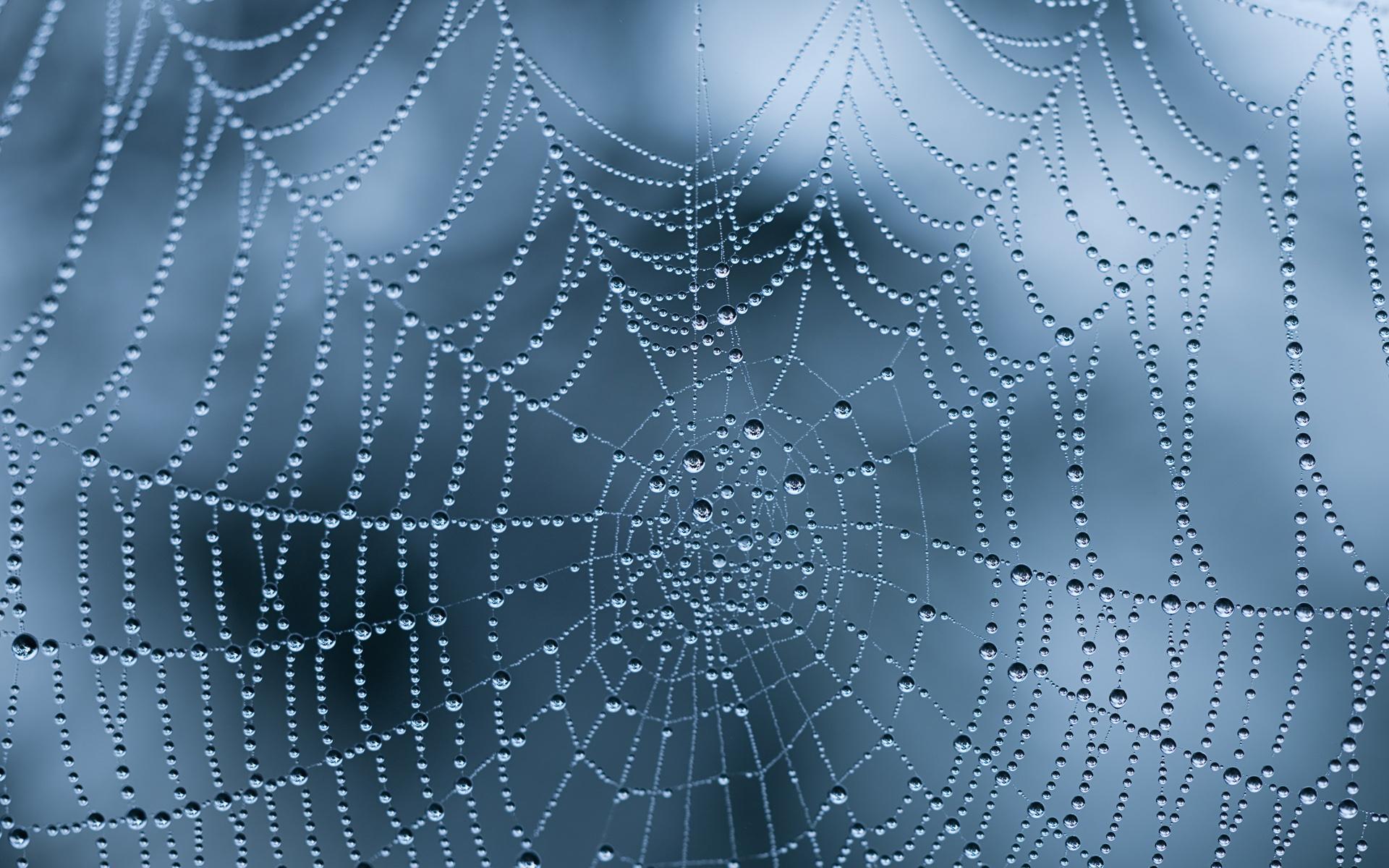 Wet Spider Web Wallpaper 49624 1920x1200 px ~ HDWallSource.com