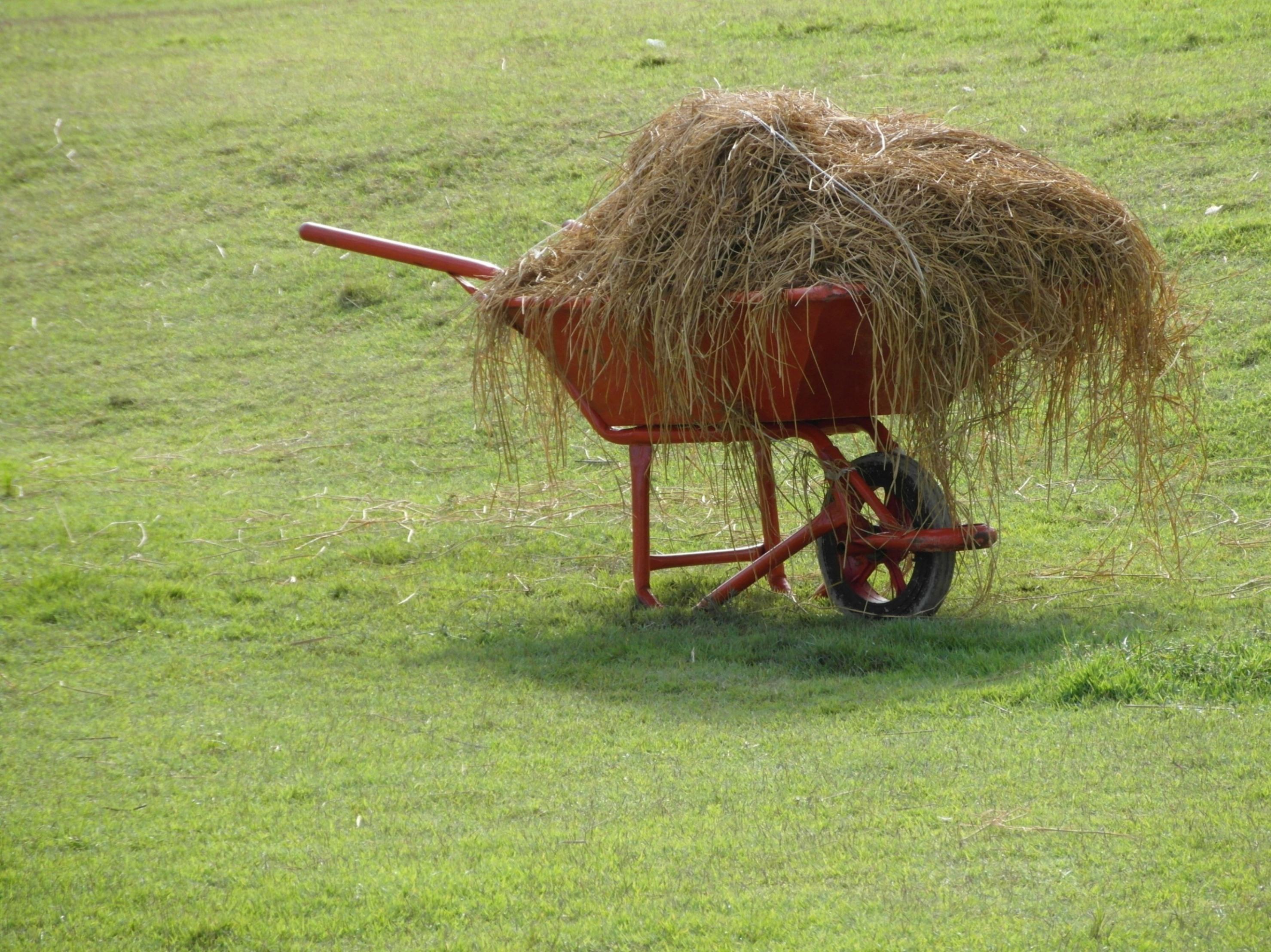 Wheelbarrow full of hay photo