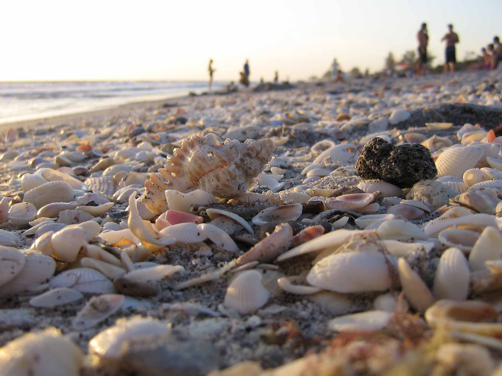 Where the shell meets the sand photo