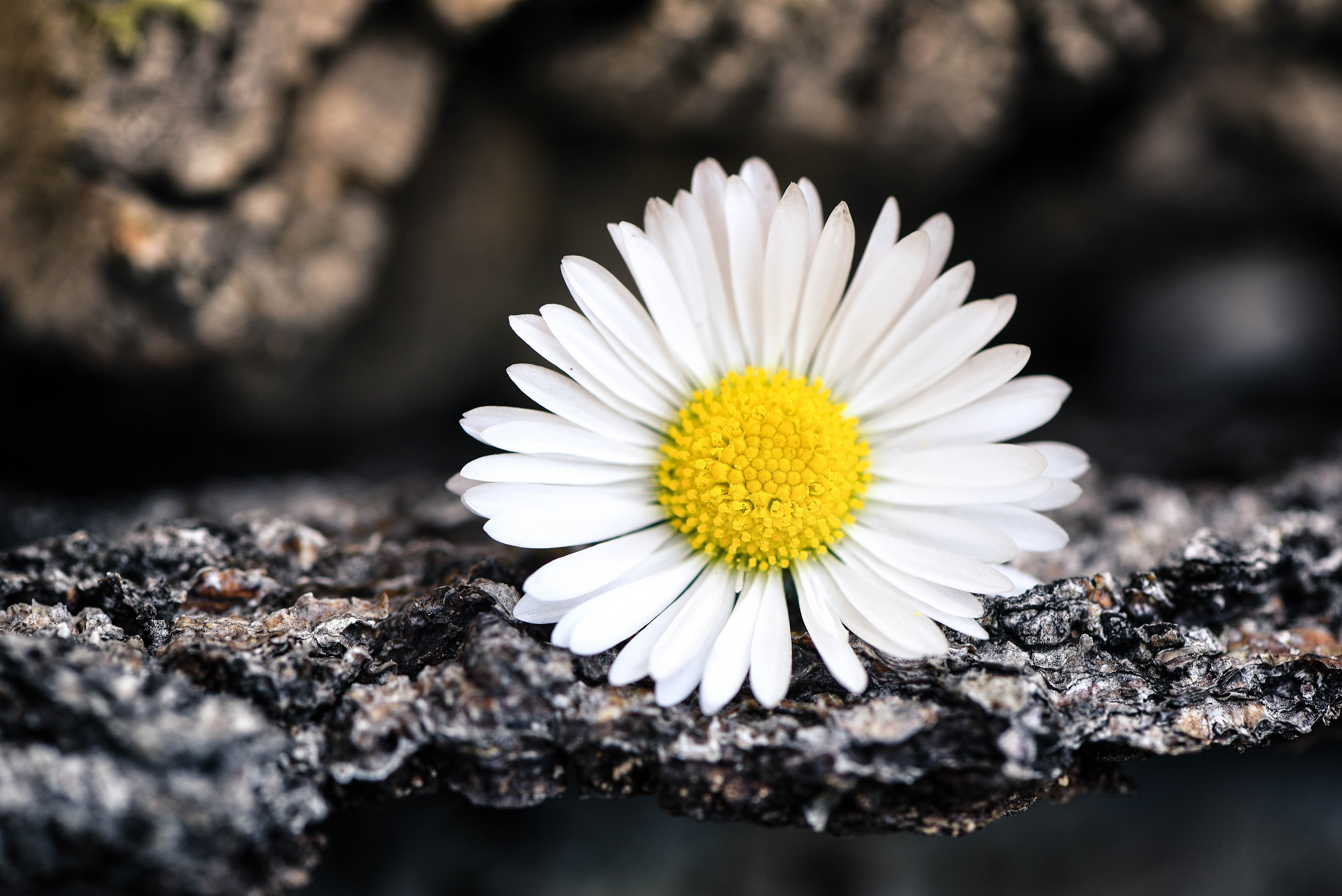 White, Nature, Fresh, Flower, Freshness, HQ Photo