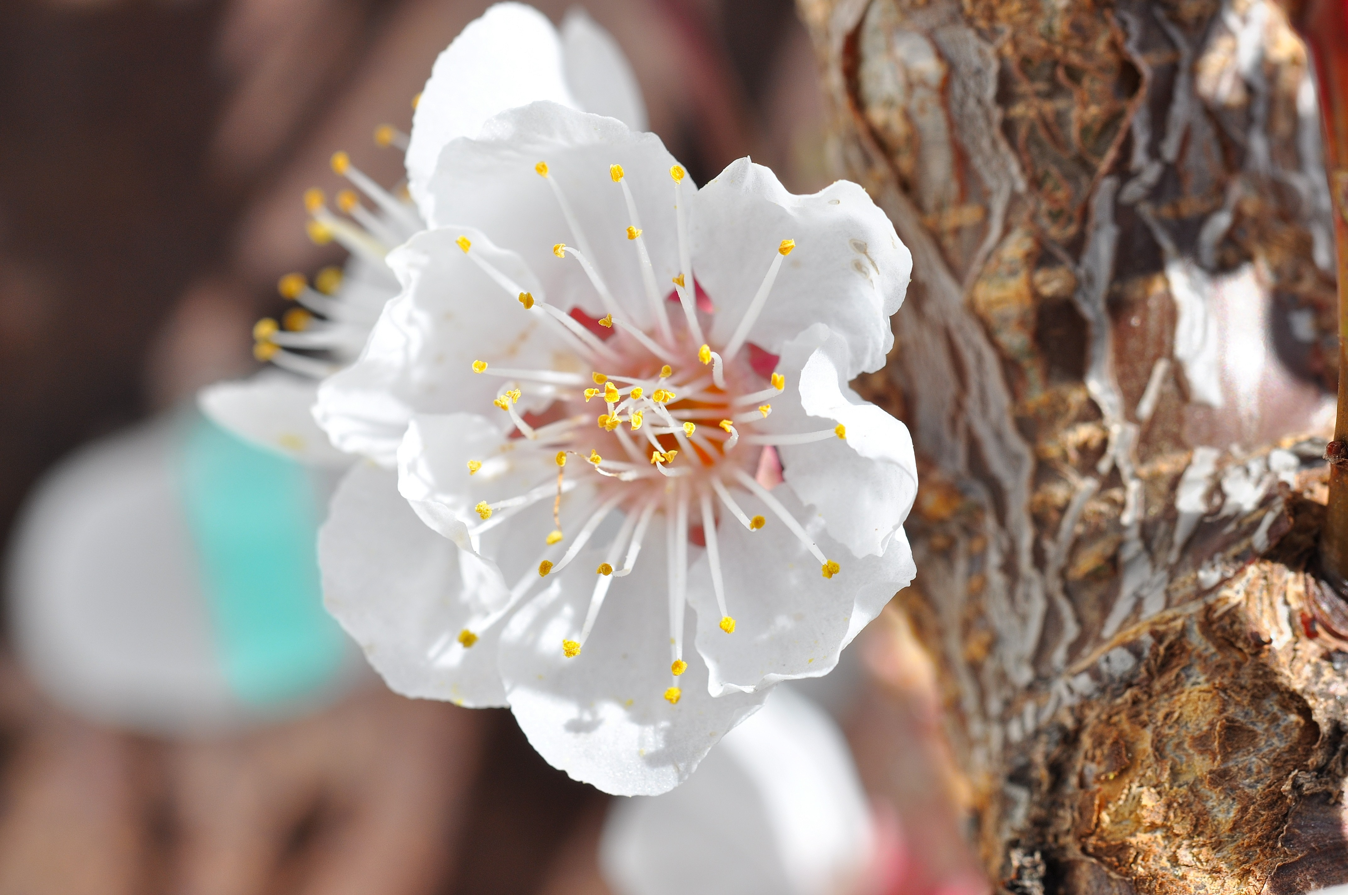 White, Nature, Fresh, Flower, Freshness, HQ Photo