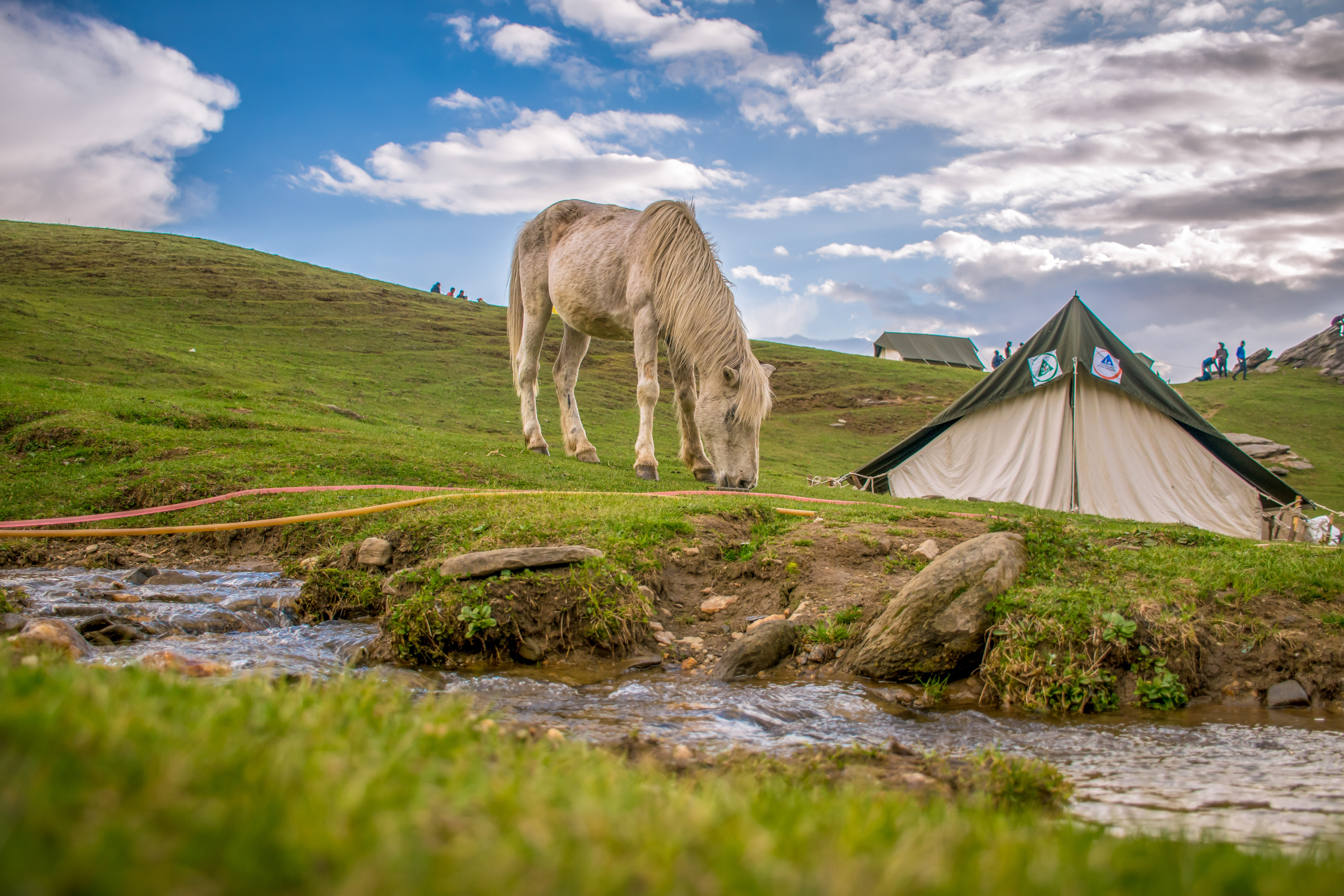 White and black tent on green grass field photo