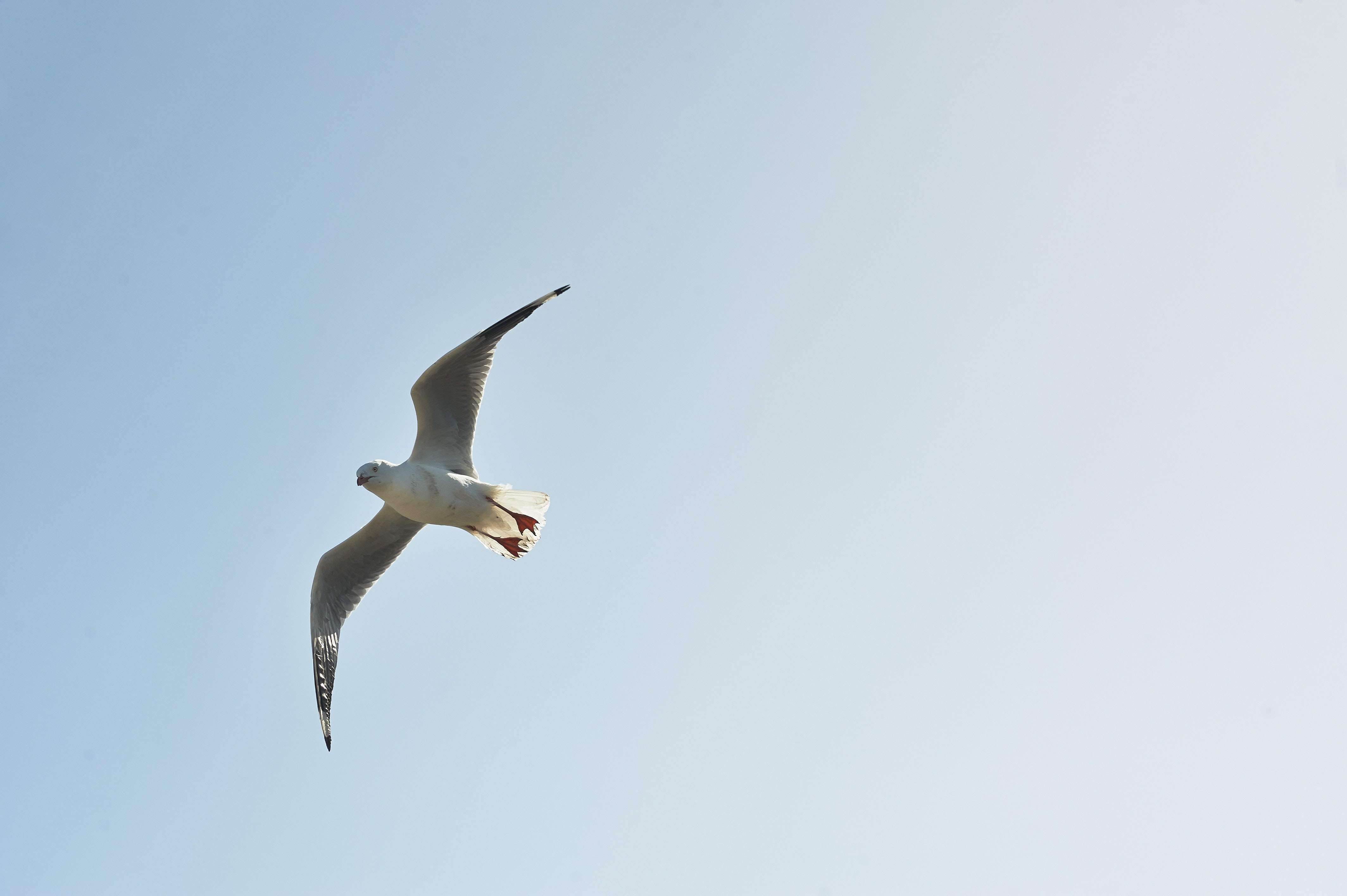 White and grey bird flying in the sky during day time photo