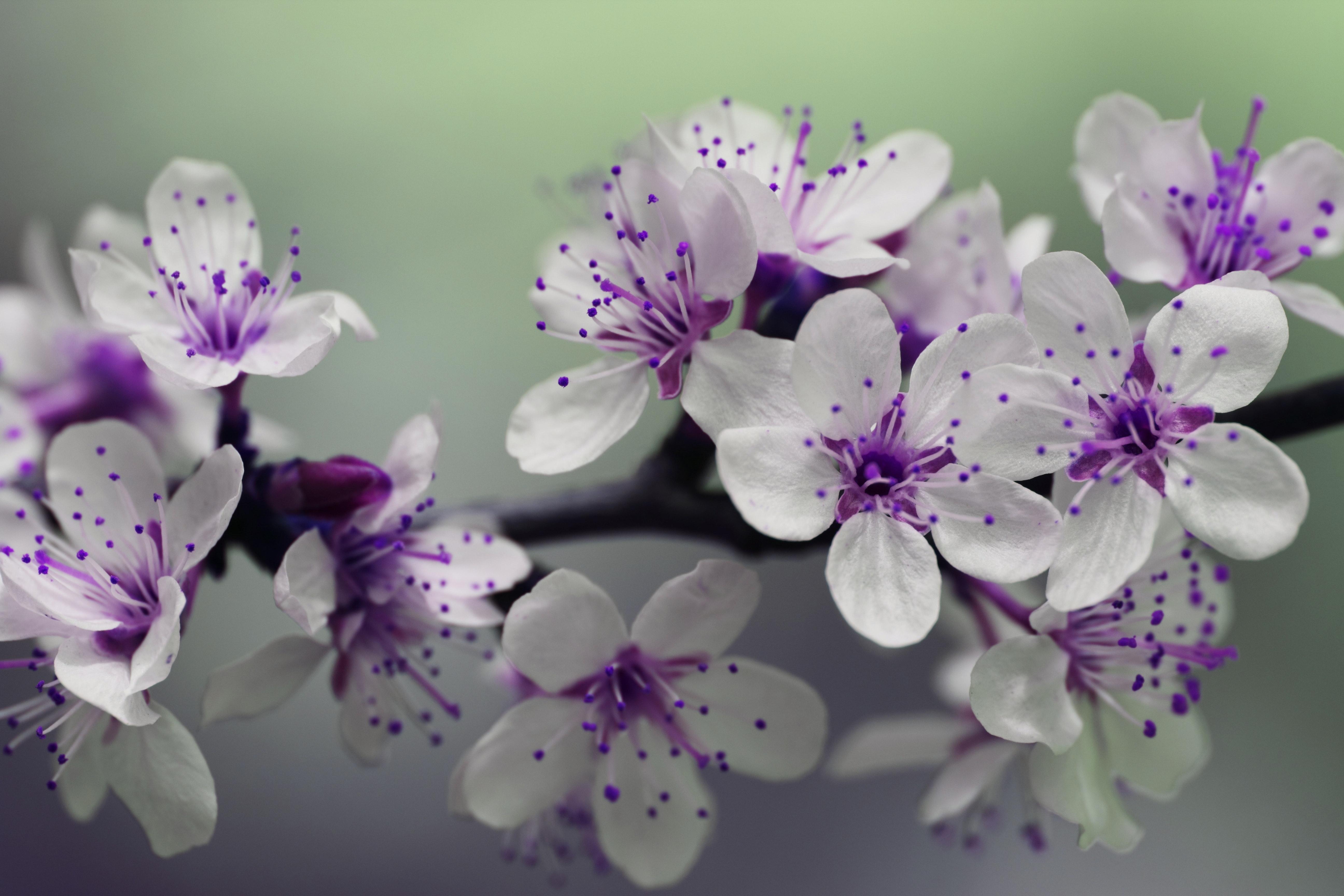 Free photo white and purple petal flower focus photography pretty white and purple petal flower focus photography mightylinksfo