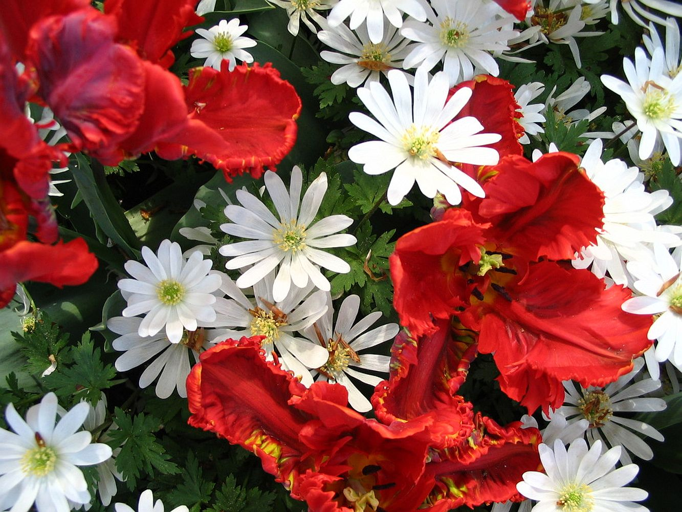 White and red flowers photo