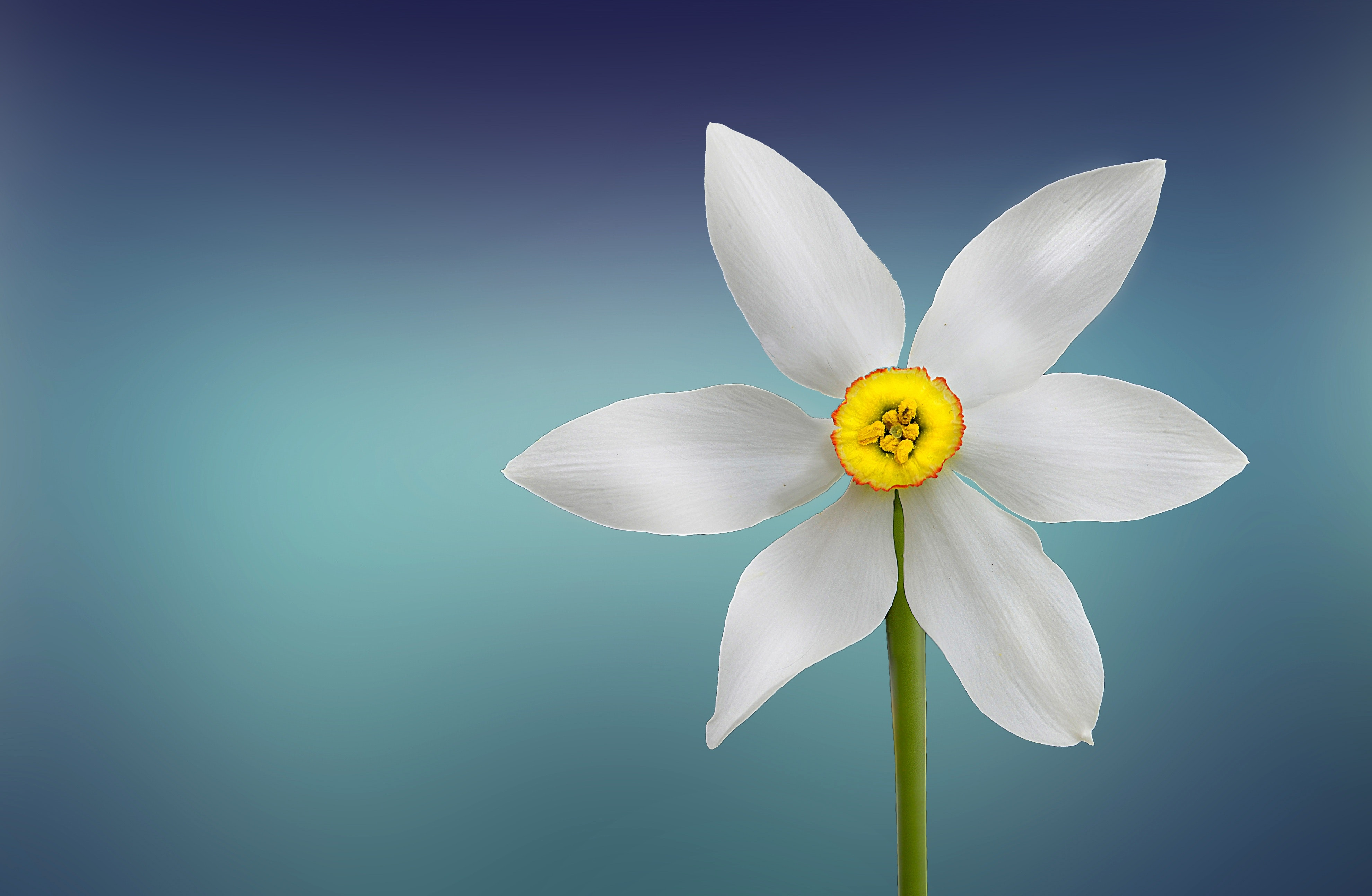 White and yellow flower photo
