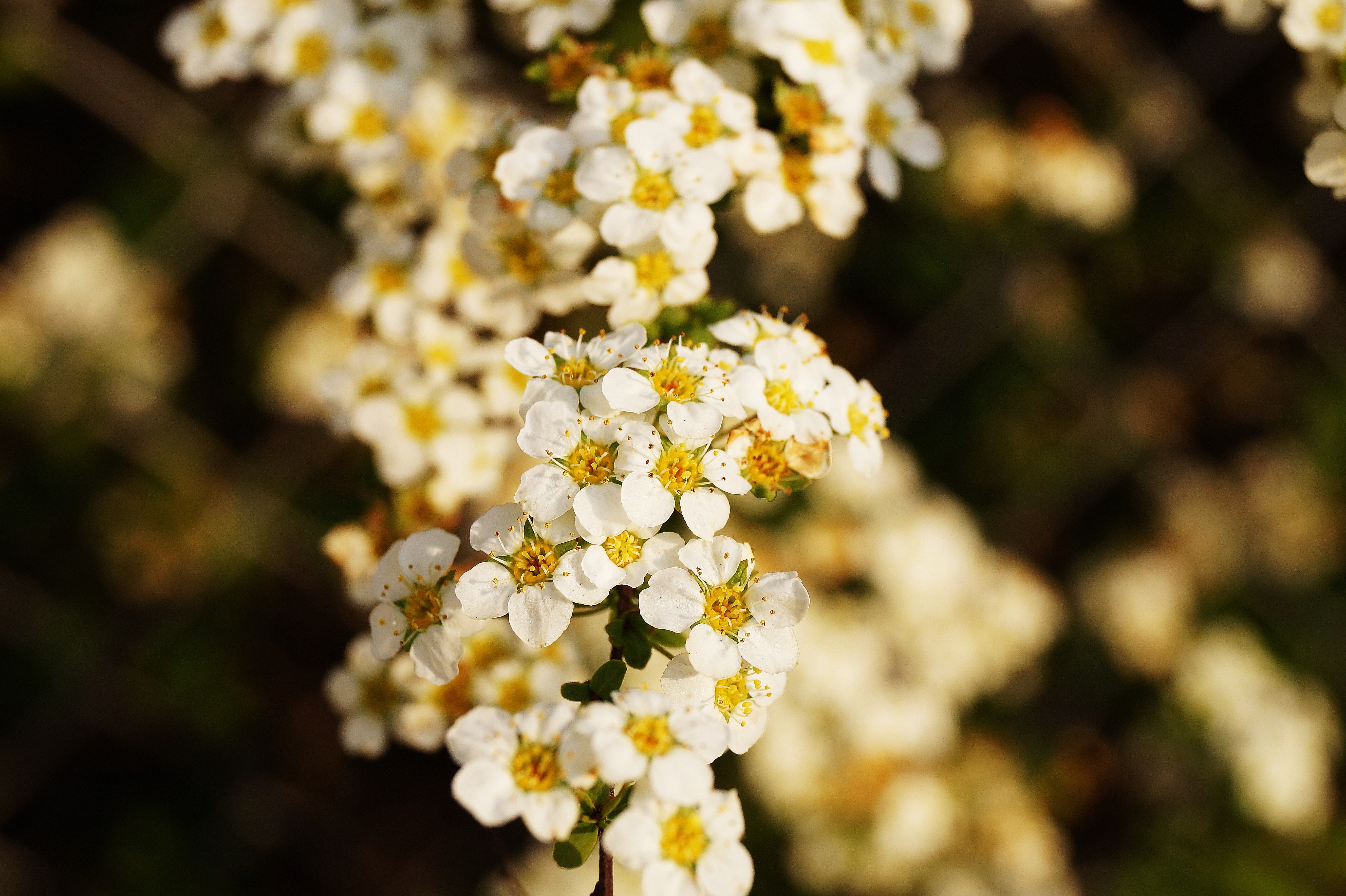 White and yellow petaled flower photo