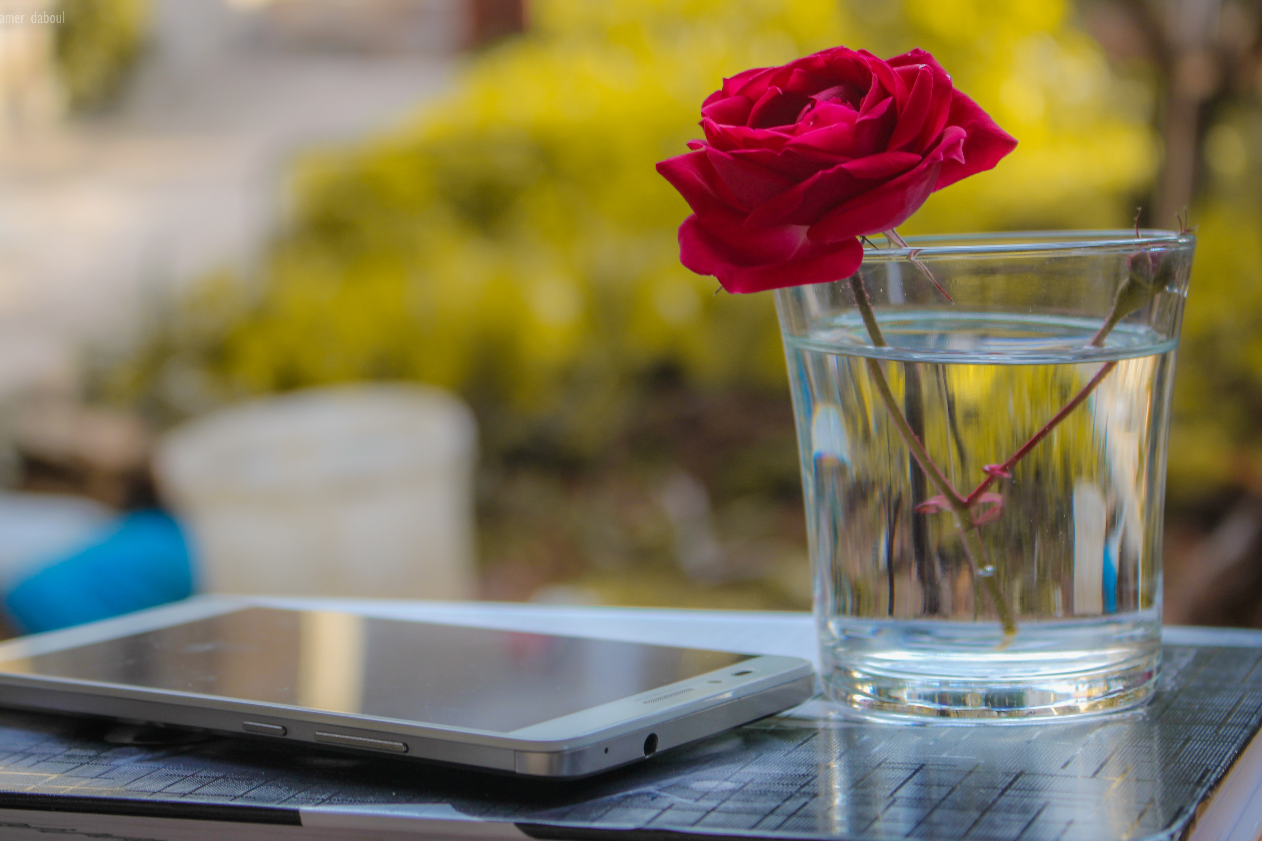 White android smartphone near clear glass vase with red rose photo