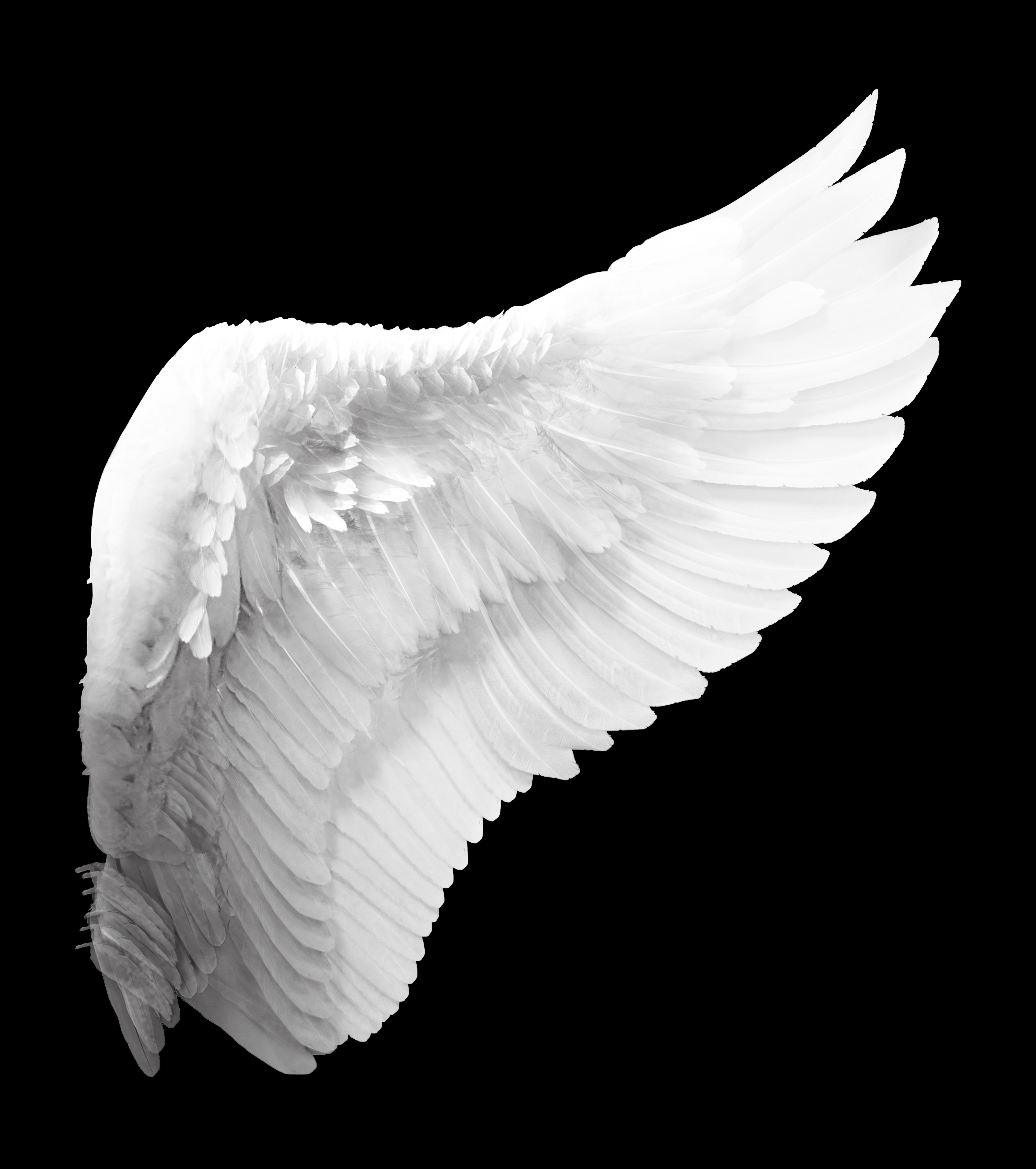 White Angel Wing, Wing, White, Feathers, Angel, HQ Photo
