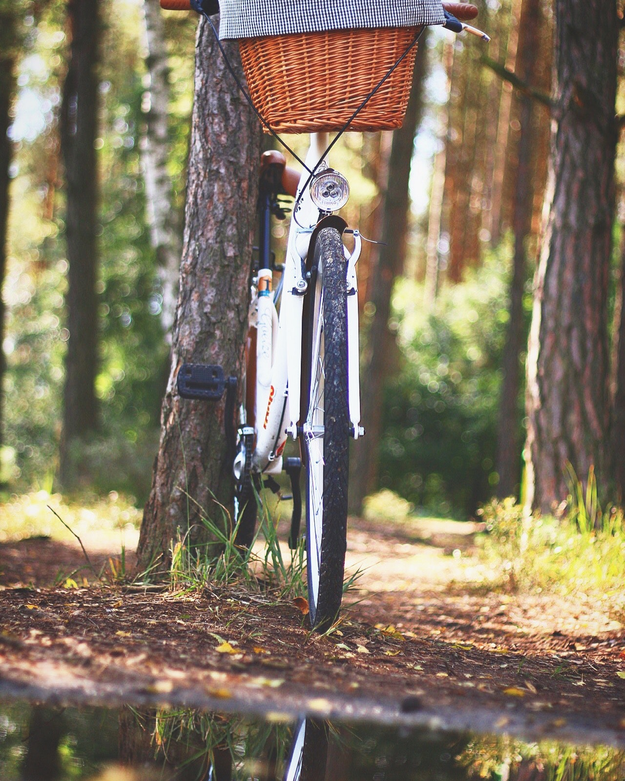 White beach cruiser bicycle parked beside brown tree photo