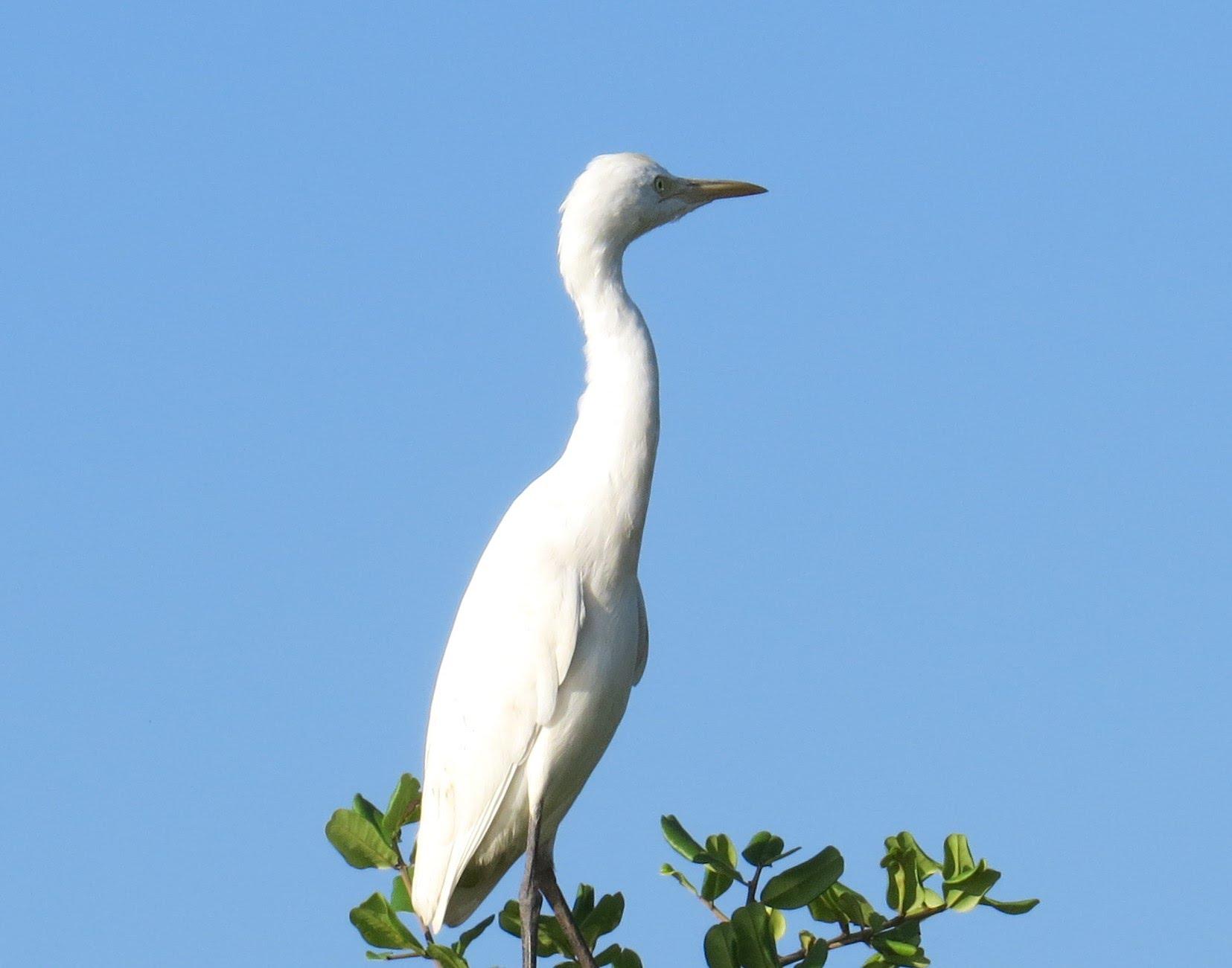 Bird Watching for relaxation - Beautiful White Bird CRANE - YouTube