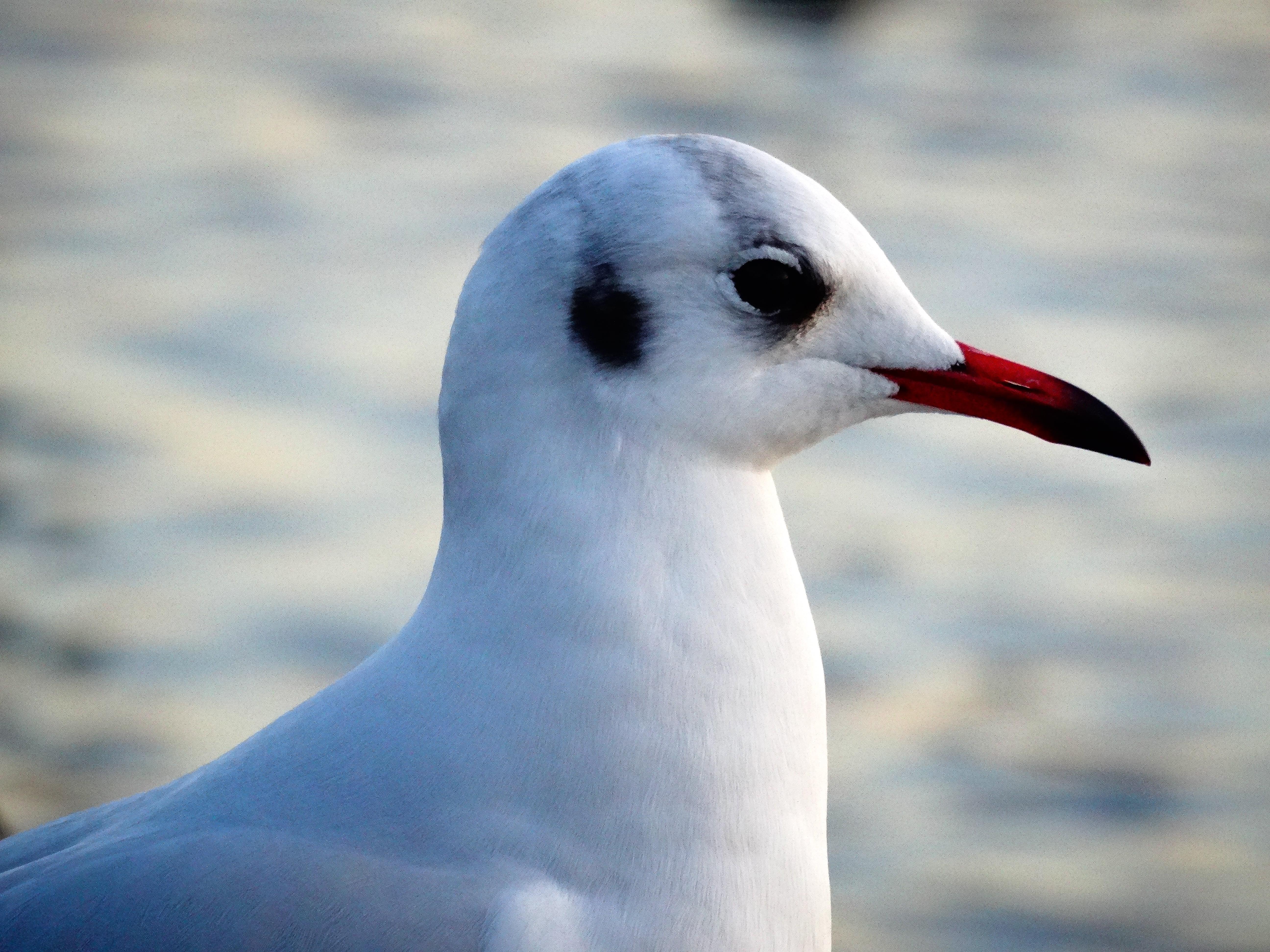 White bird, Seagull, Bird, Beak HD wallpaper | Wallpaper Flare