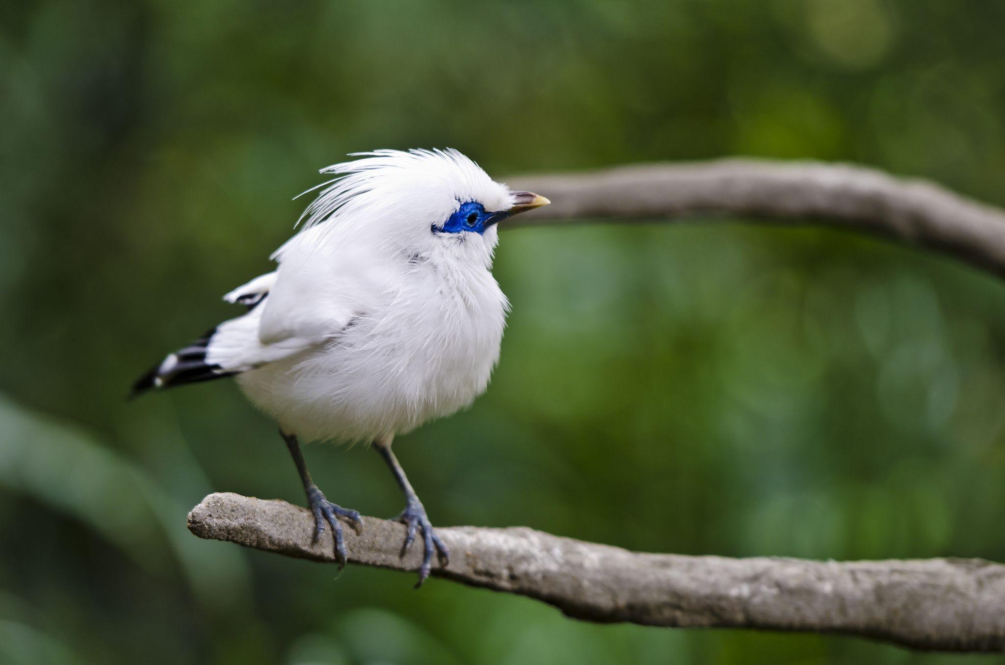 white bird - Beautiful Birds Wallpapers HD | birds | Pinterest ...