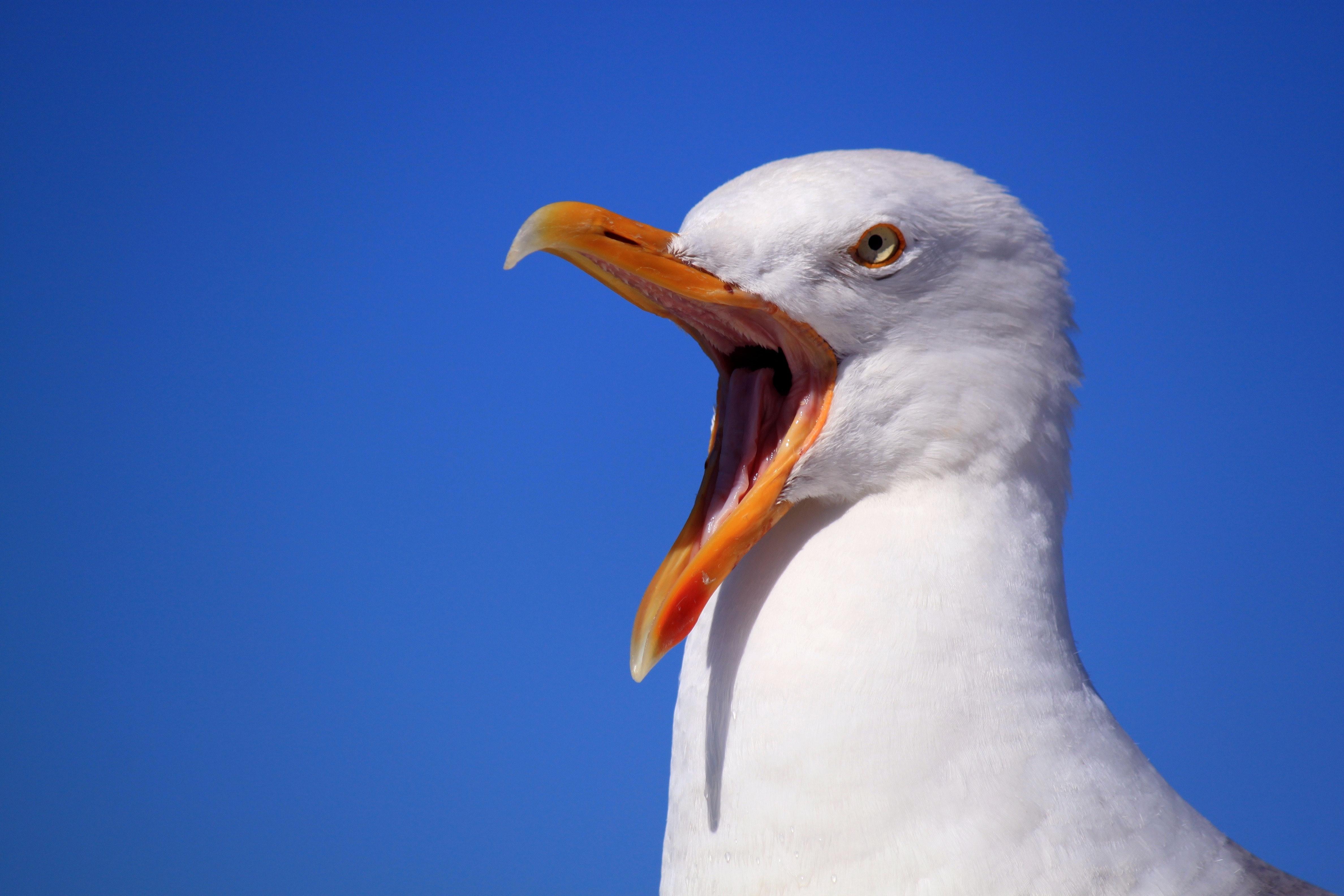 White Bird, Animal, Beak, Bill, Bird, HQ Photo