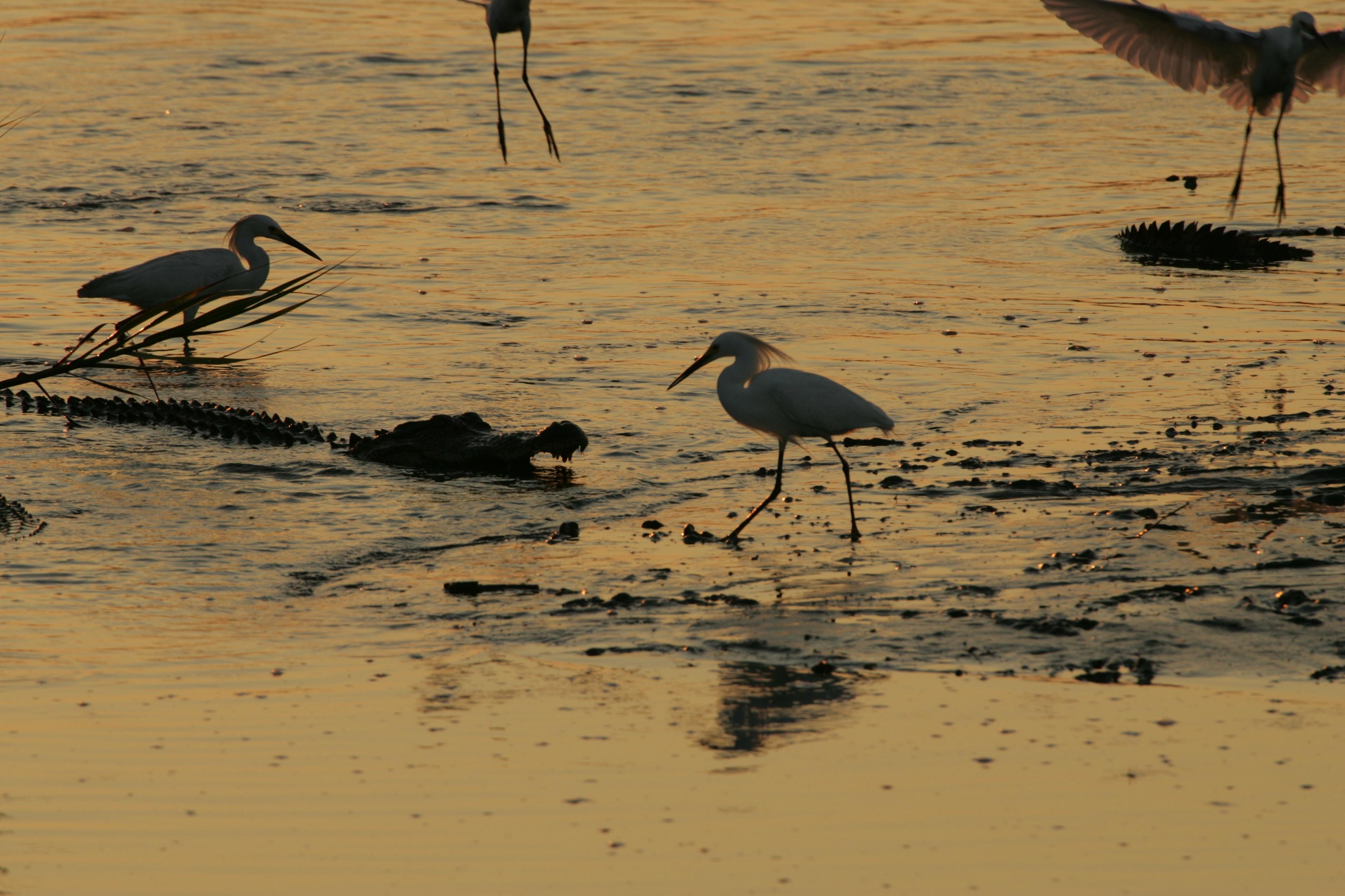 White birds on the rivershore photo