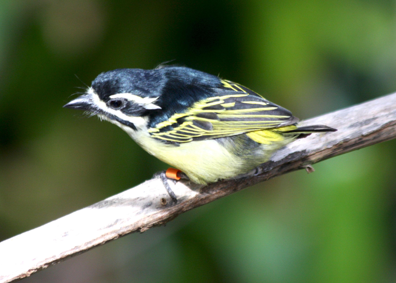 Avise's Birds of the World