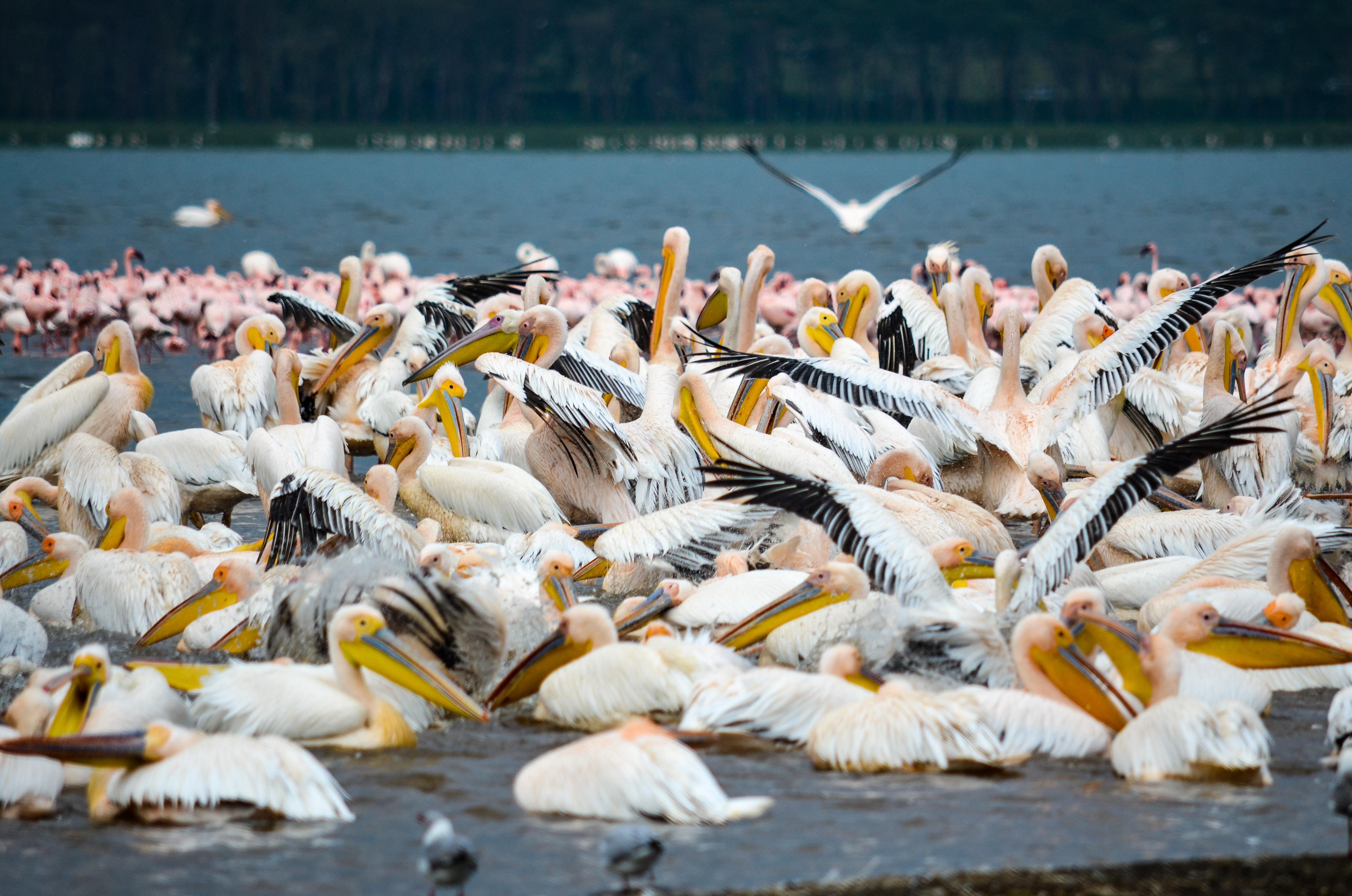 White, black, and yellow birds photo