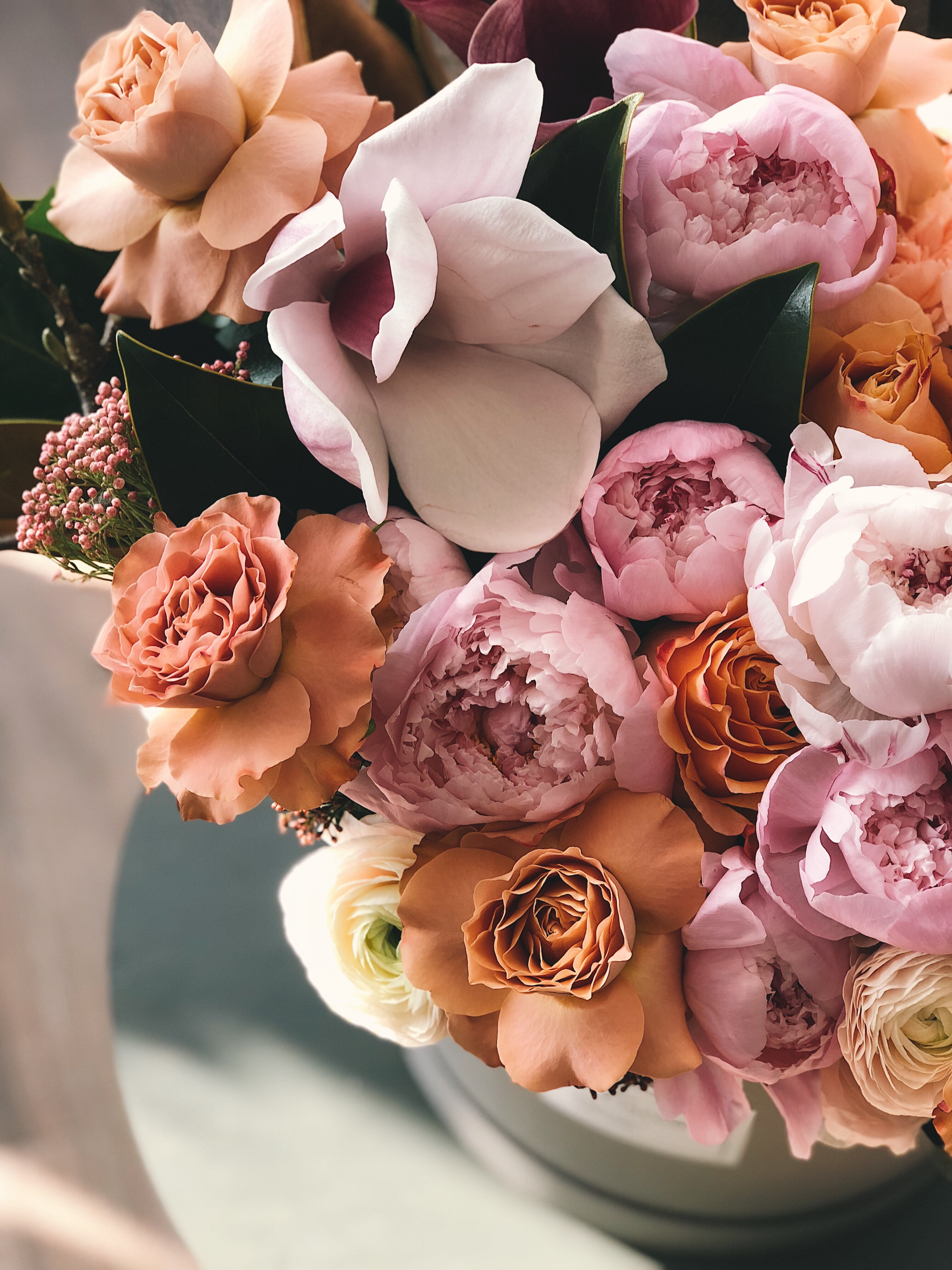 White, brown, and purple petaled flowers photo