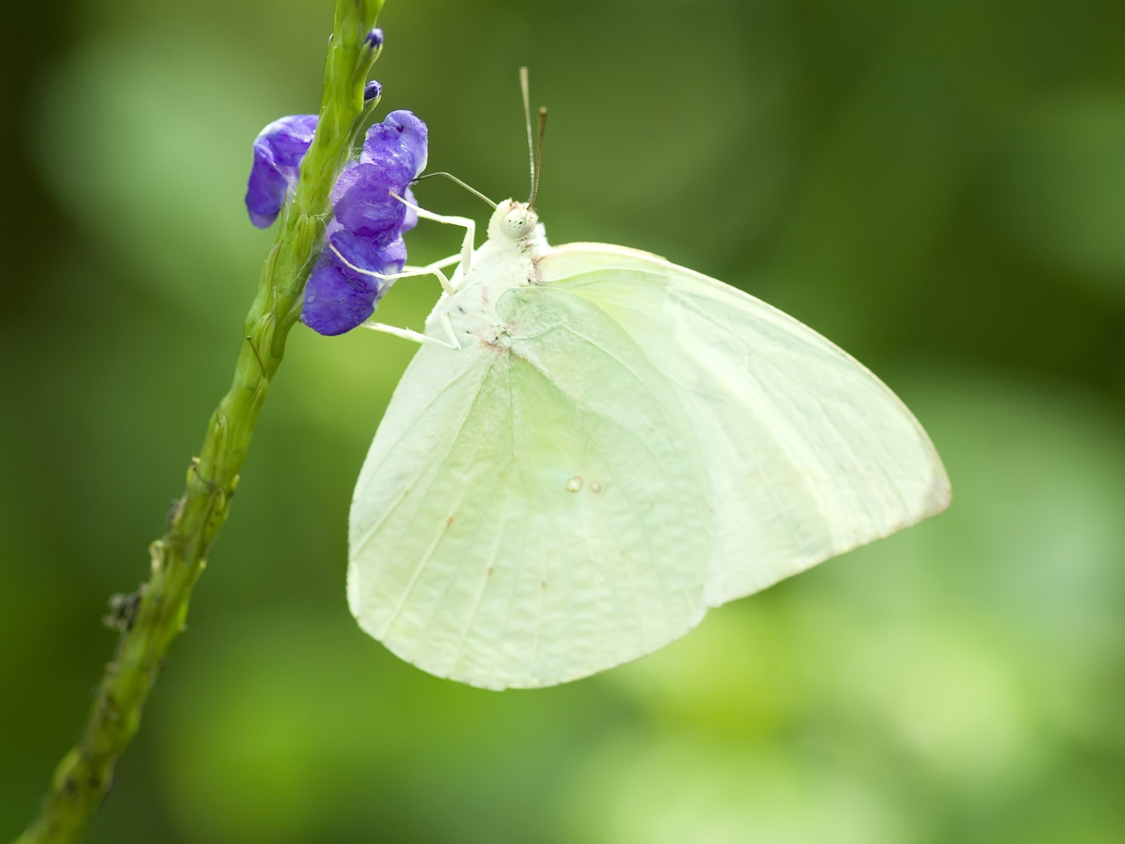 white butterfly - Google Search | deathville | Pinterest | White ...