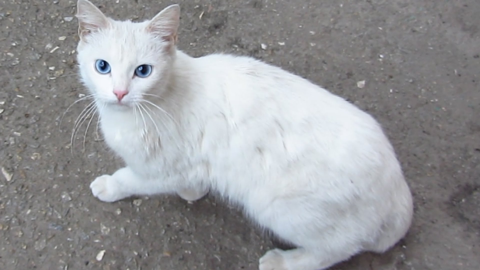 Hungry cat - White cat really wants to eat - YouTube
