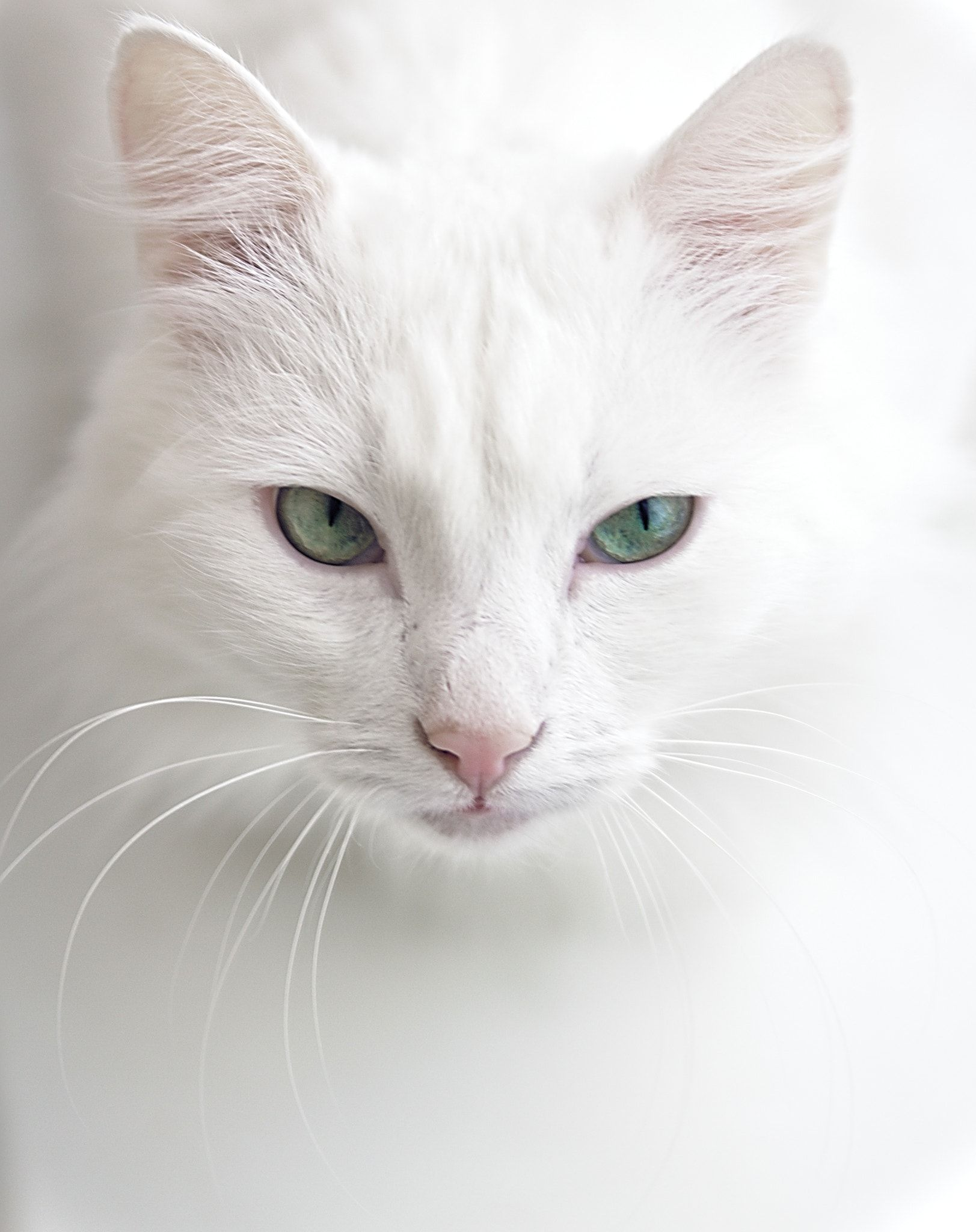 White Cat by Pavel Zilke on 500px | Whiter shade of pale ...