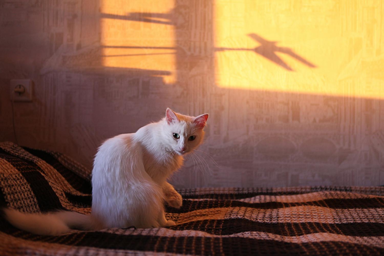 White Cat, Animal, Beautiful, Cat, Eyes, HQ Photo