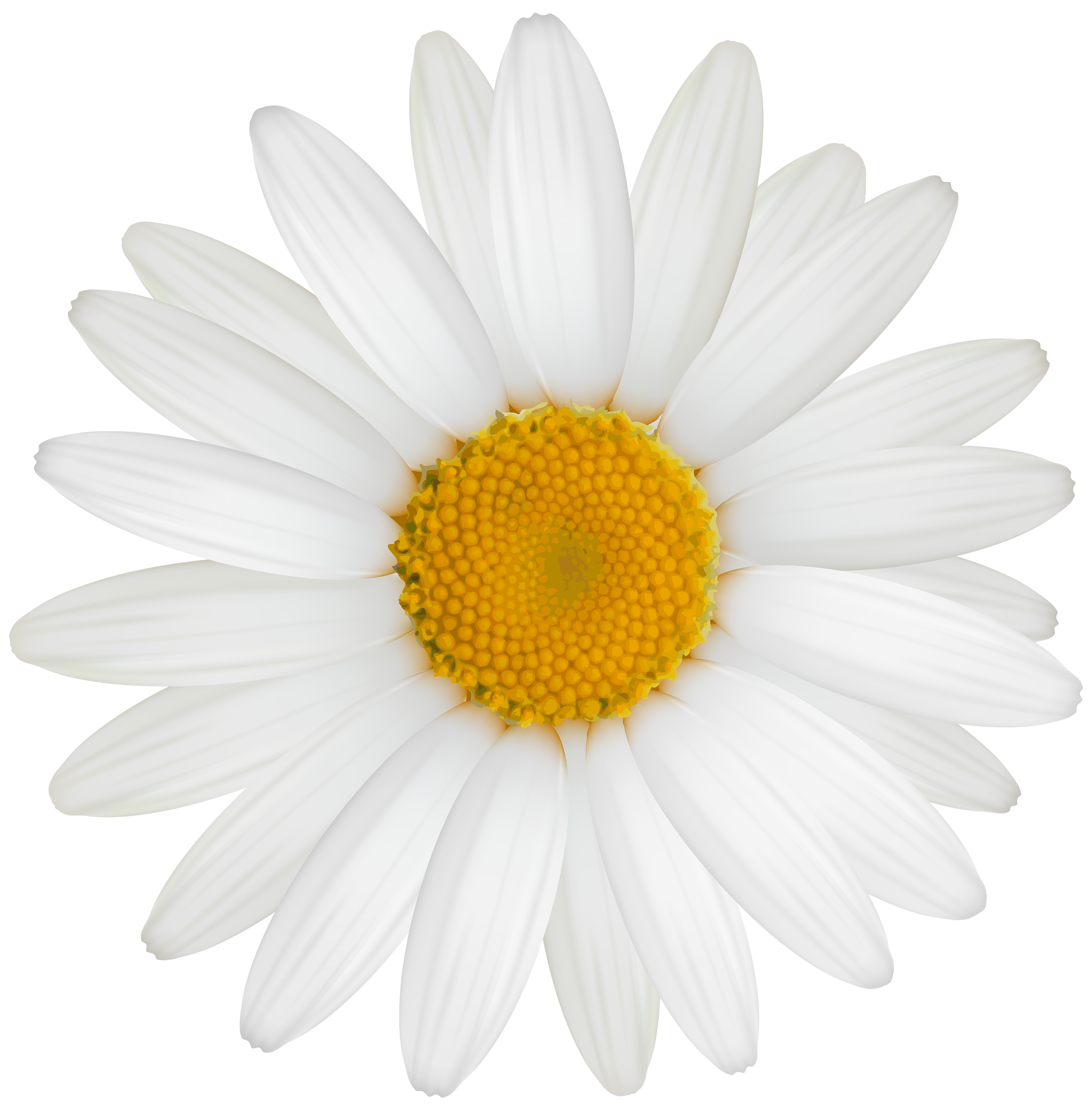 White Daisy PNG Clipart - Best WEB Clipart