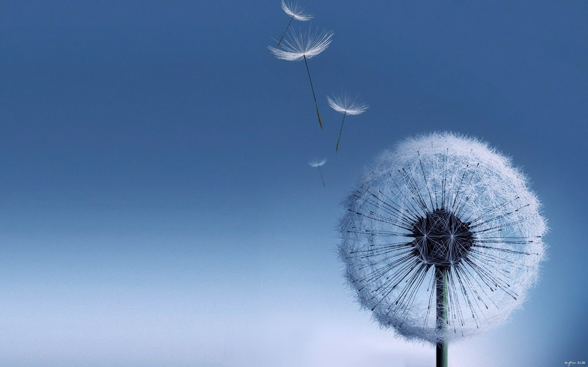 Free photo white dandelion flower growth grass little free white dandelion flower mightylinksfo