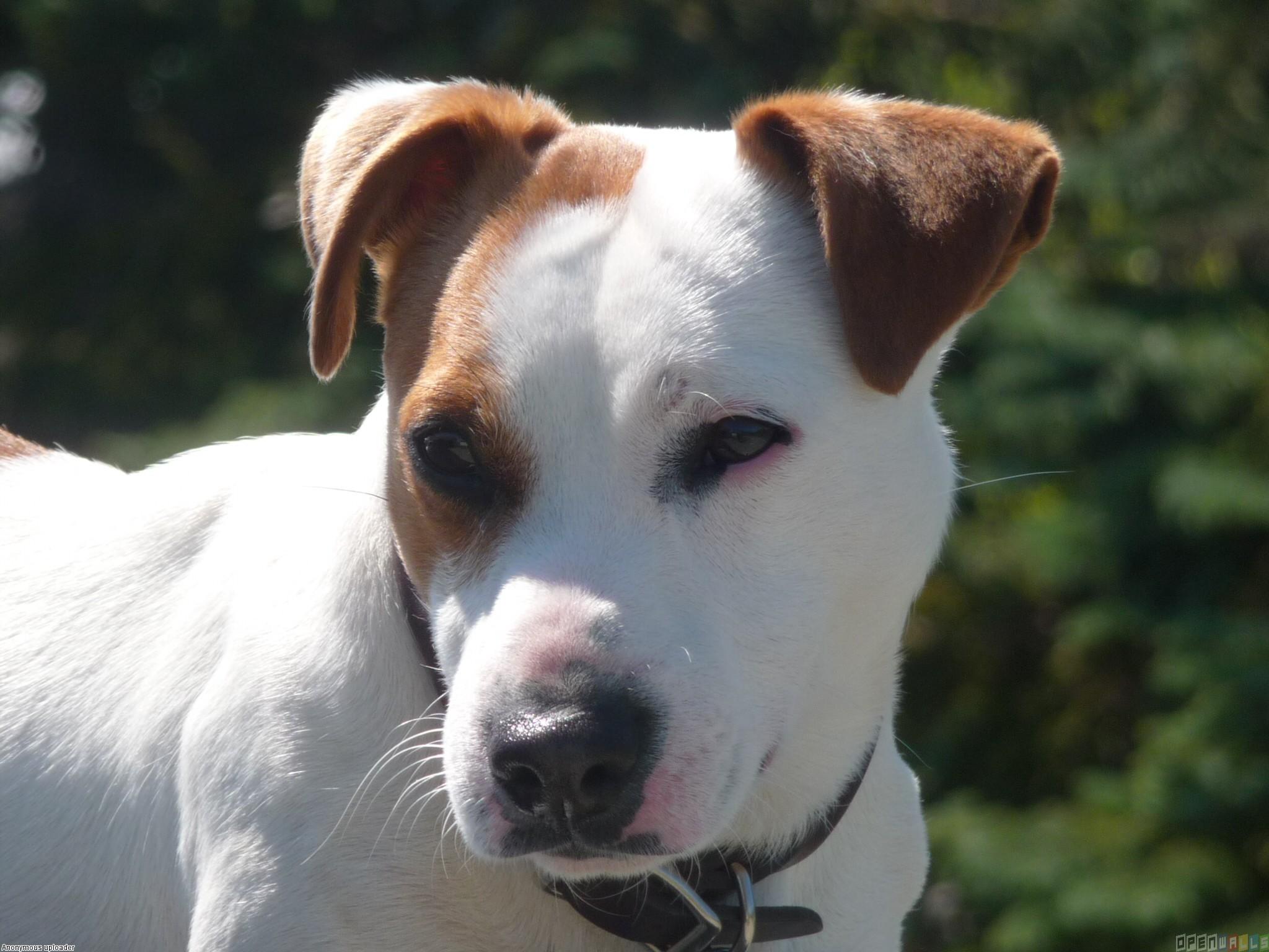 White dog photo