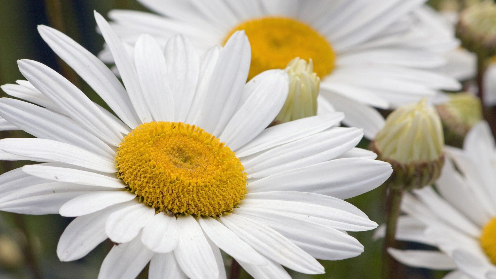 Free Photo White Flower White Plant Bloom Cc0 License Free