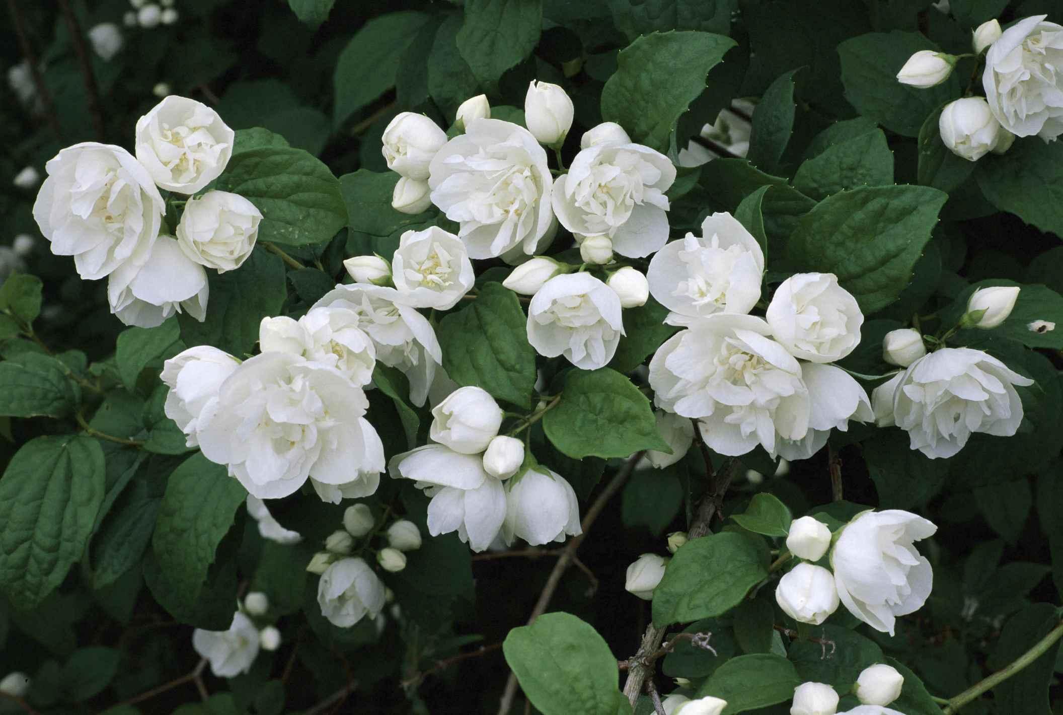 Free photo white flower macro nature garden free download white flower mightylinksfo