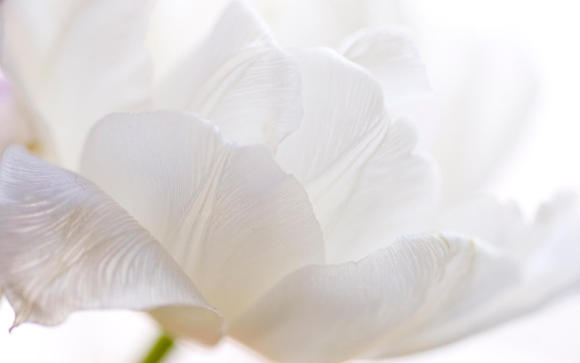 Free Photo White Flower Plants White Grow Free Download Jooinn