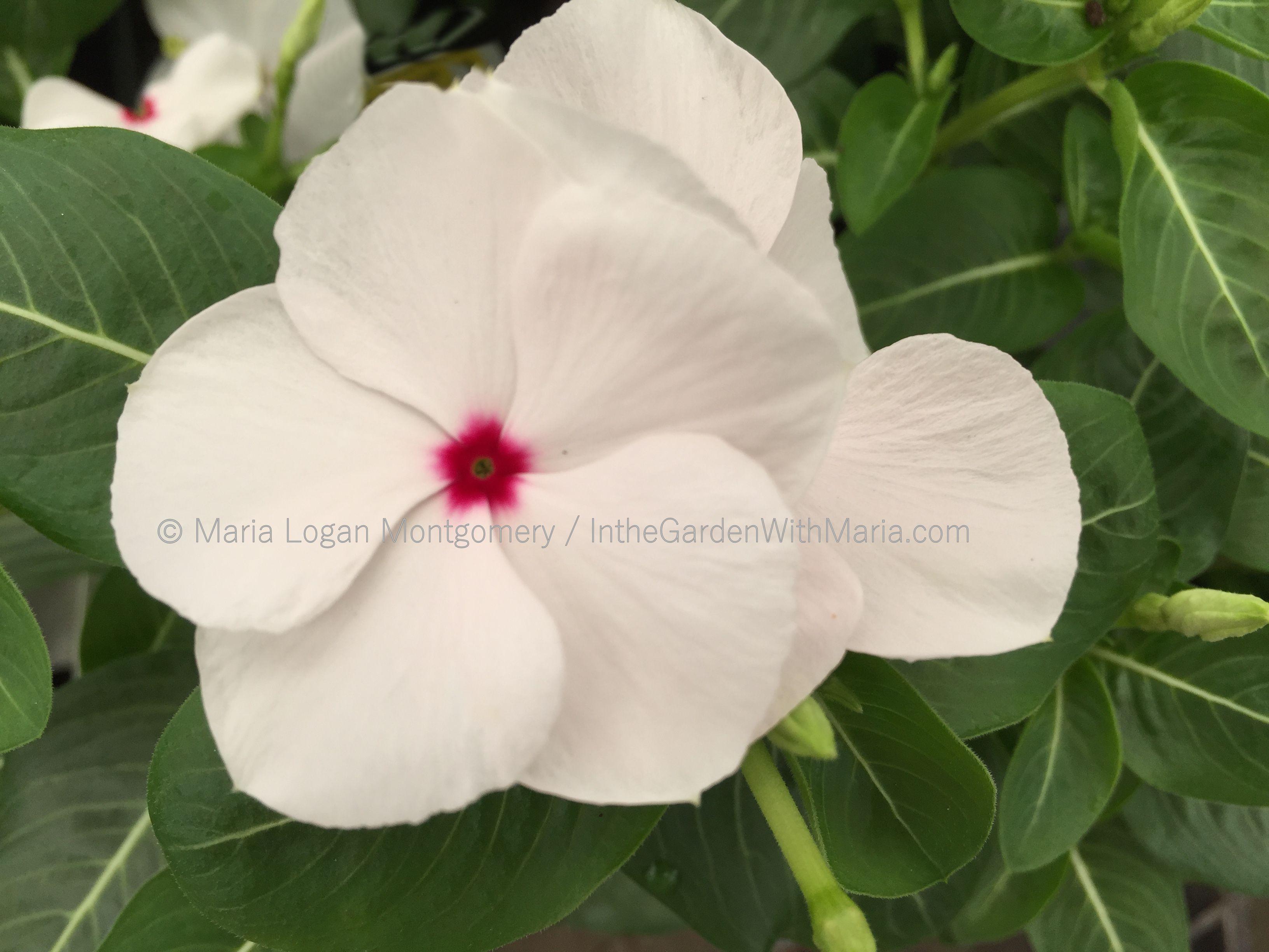 Free photo white flower spring seasonal season free download white flower mightylinksfo