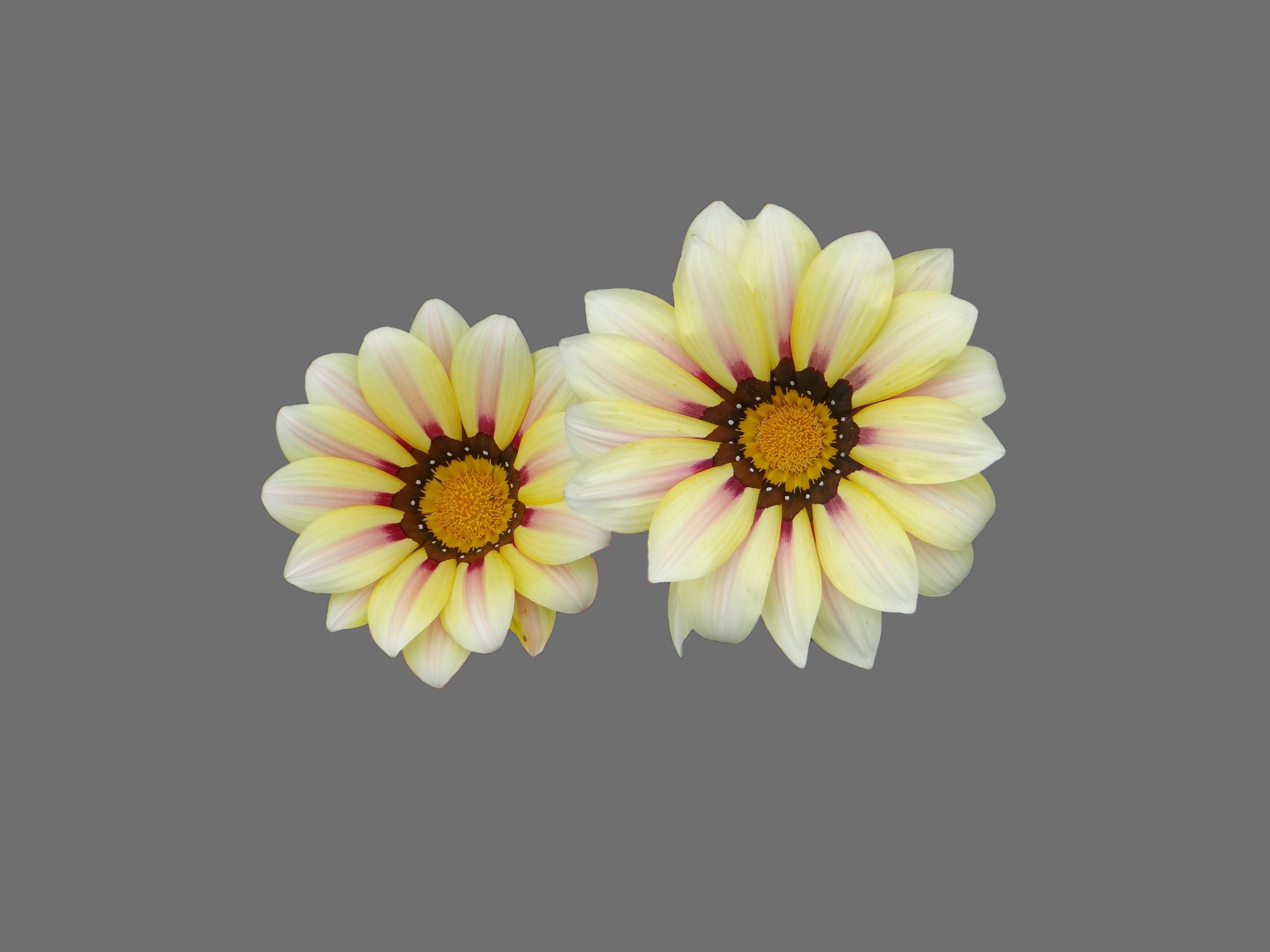 White flower, Flower, Nature, White, HQ Photo