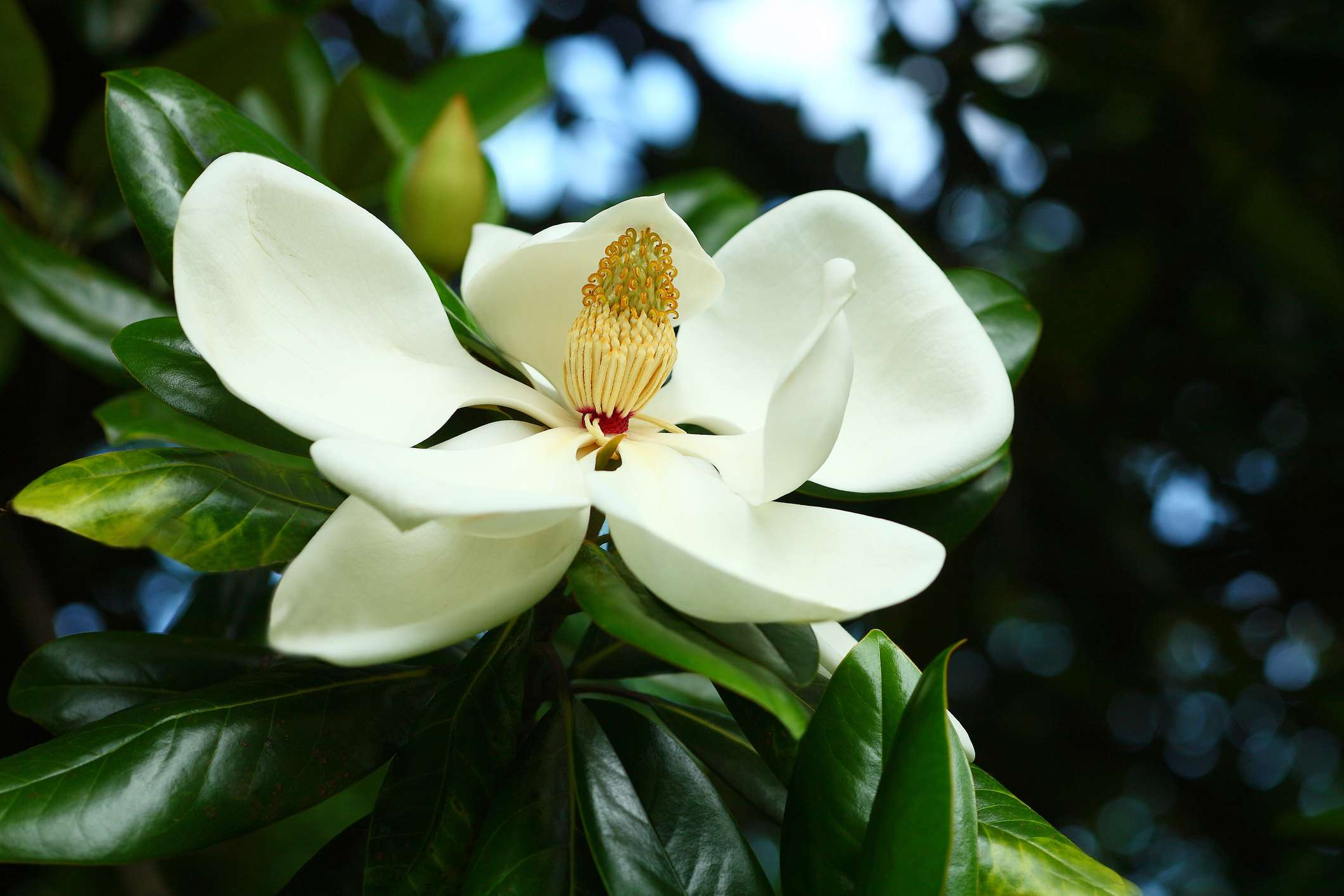 Free Photo White Flower Plant Pretty Nature Free Download