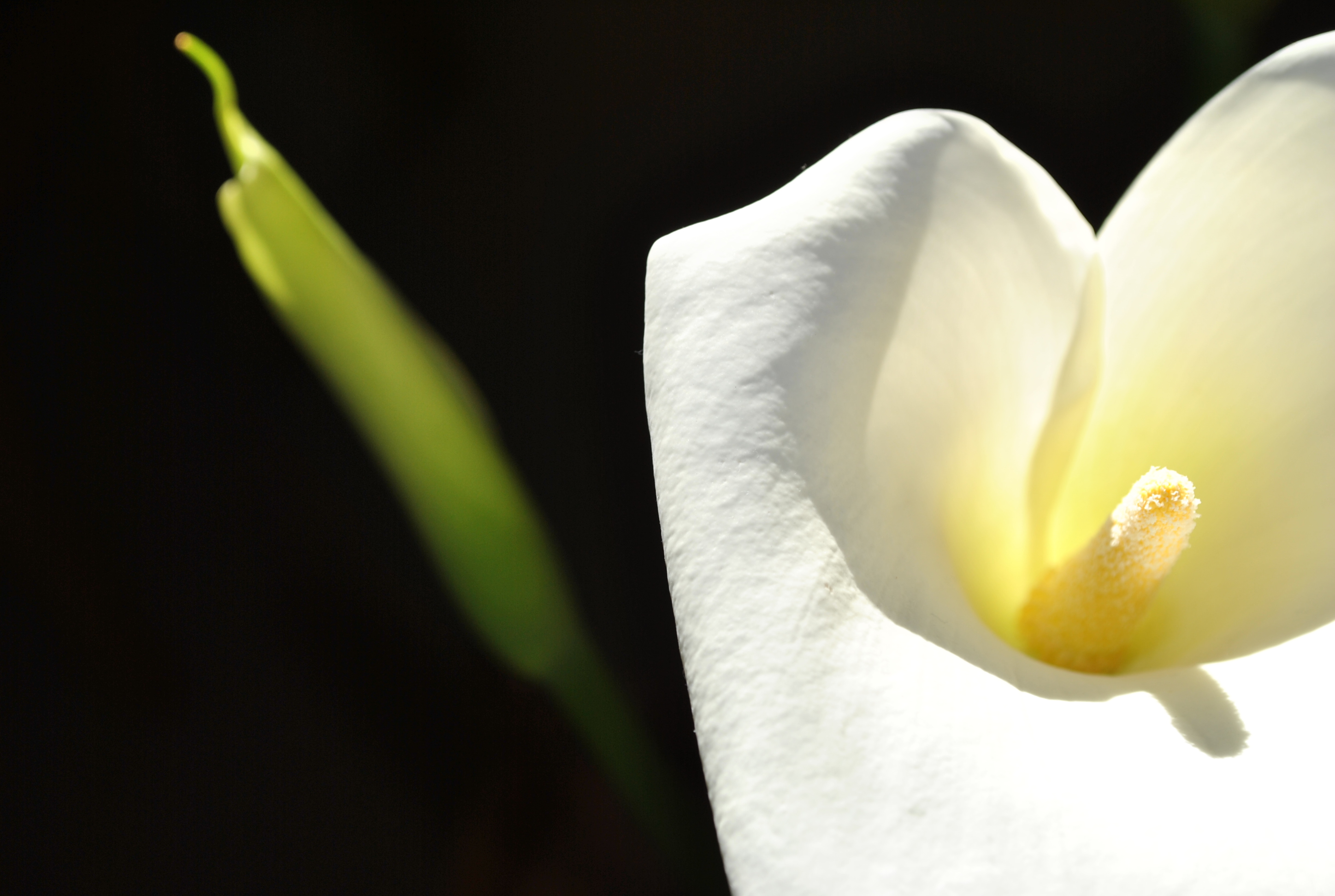 Free photo white flower white lily flower free download jooinn white flower white lily flower hq photo izmirmasajfo