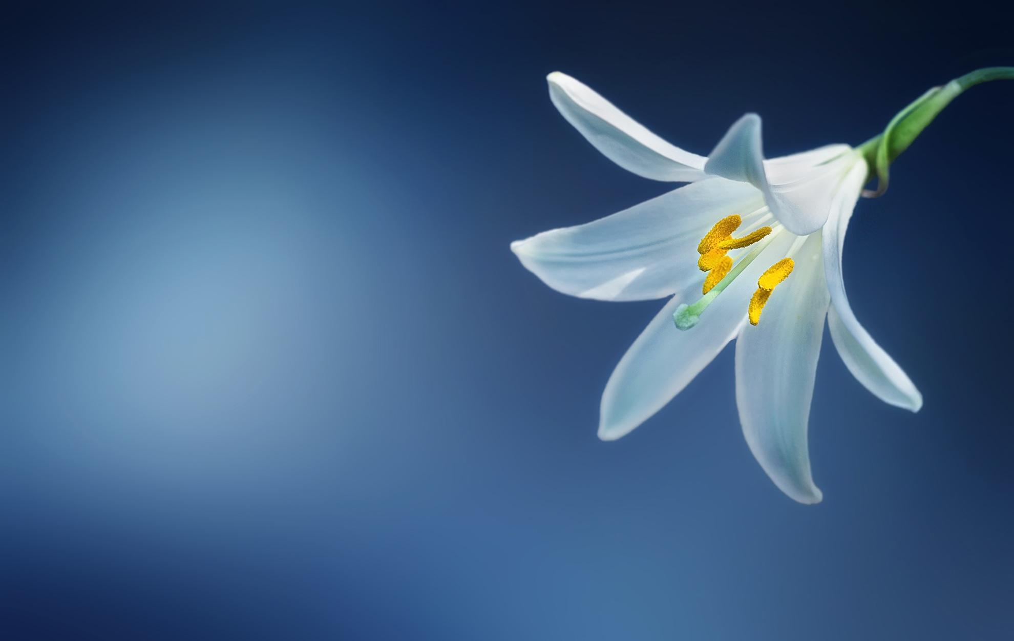 Free Photo White Flower Garden Nature Fresh Free Download
